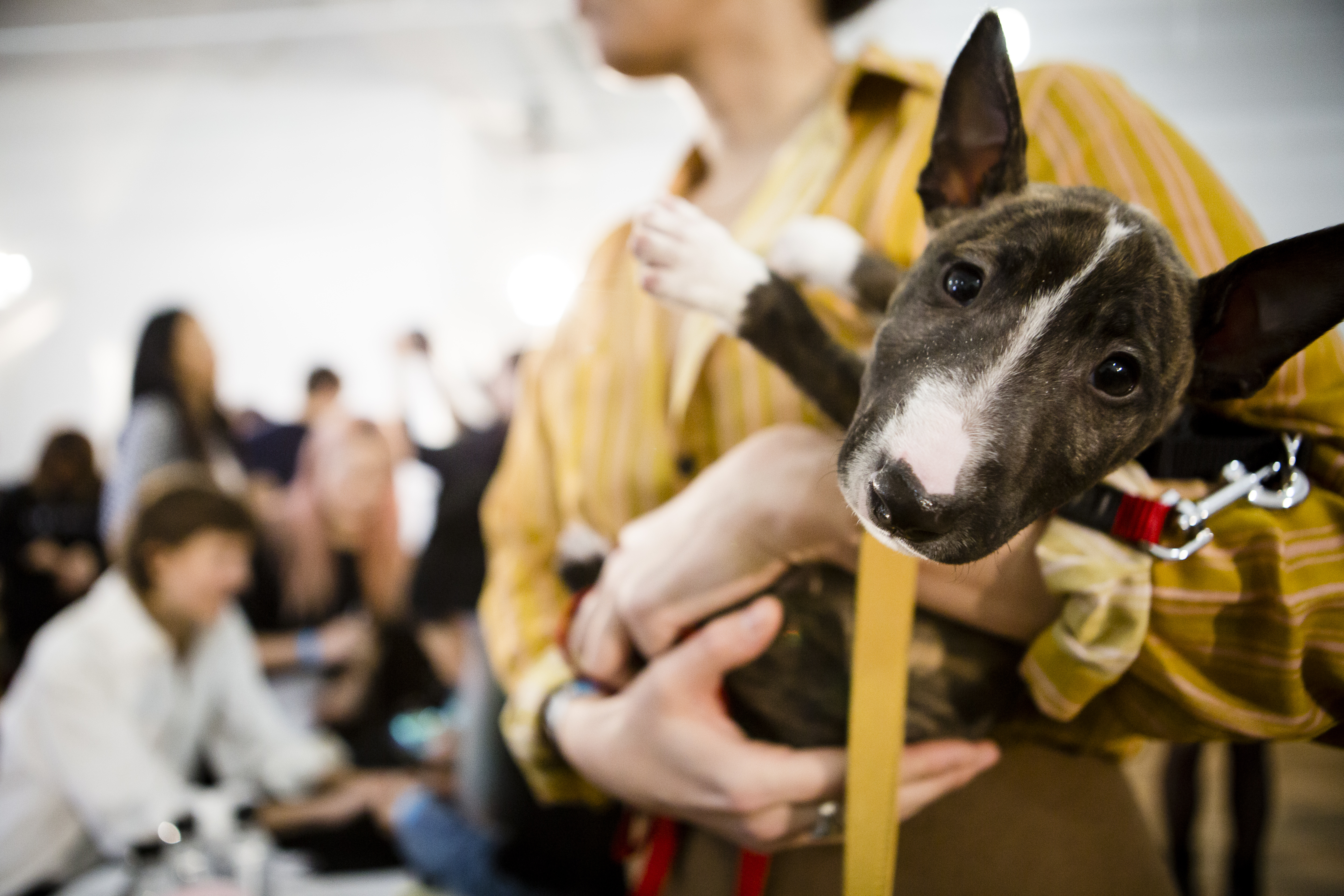 Creatures of Comfort - Backstage - Fall 2016 New York Fashion Week