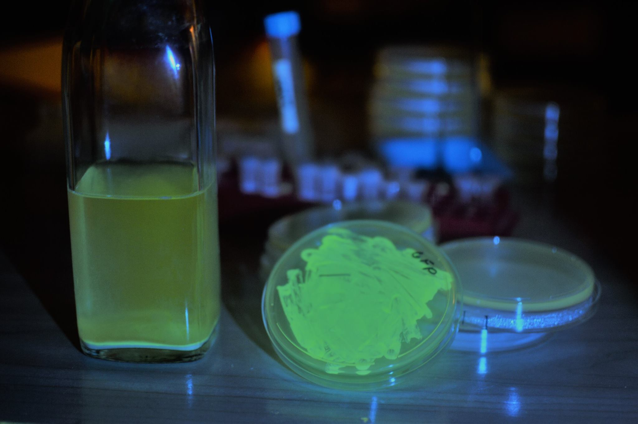 Make Your Own Glow-in-the-Dark Beer With Fluorescent Yeast