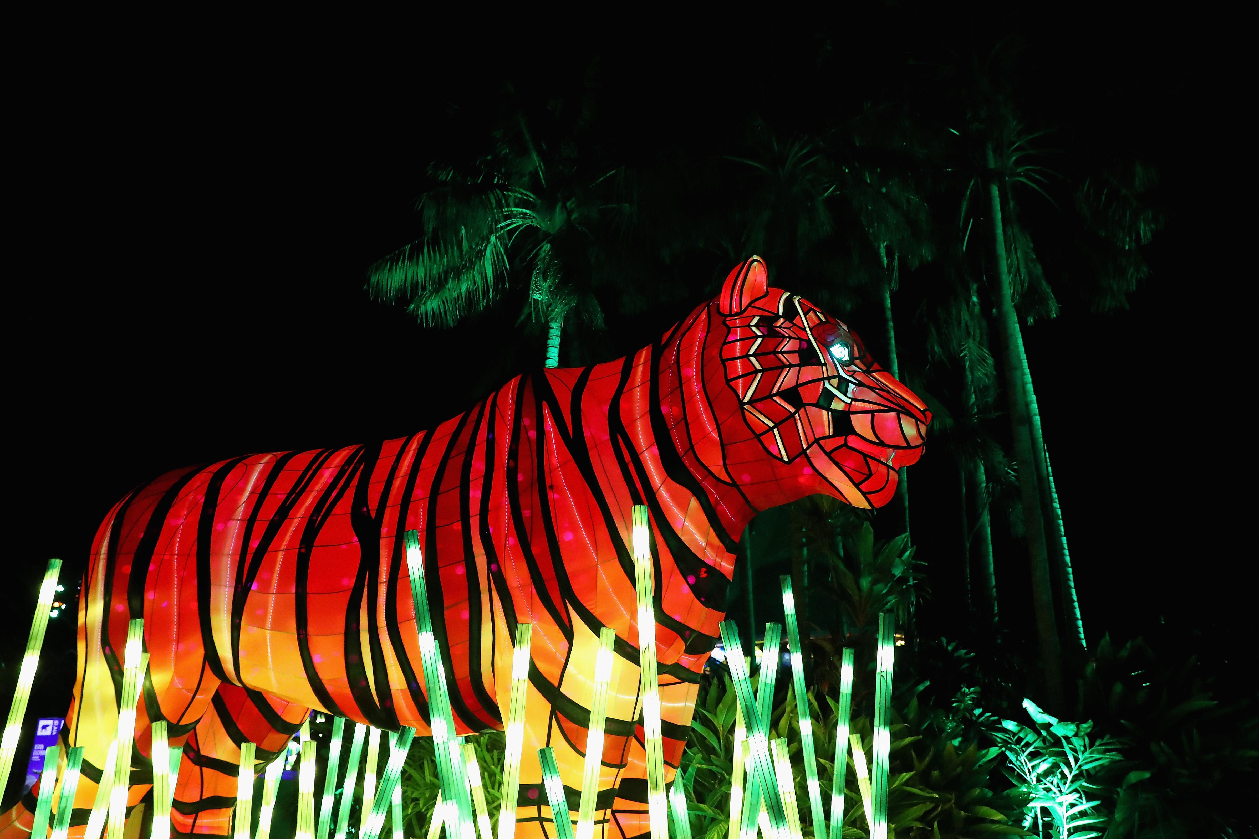 Giant Animal Lanterns Light Up Taronga Zoo For Vivid Sydney