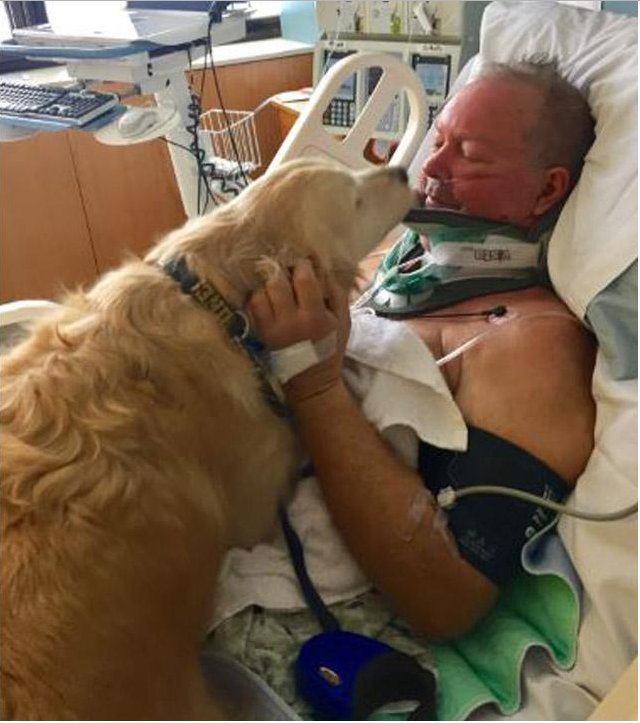 Heroic dog saves owner's life by keeping him from freezing