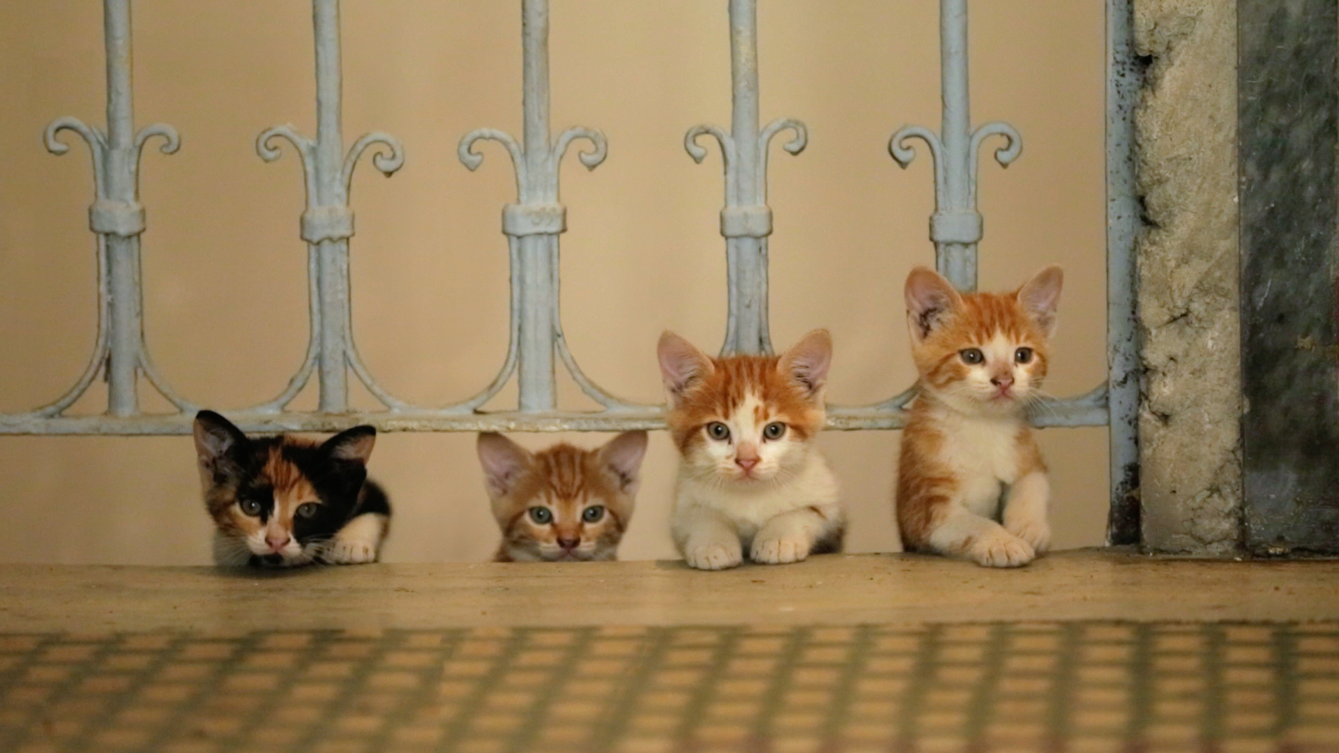 Kedi, a documentary about cats in Istanbul, is expectedly adorable and unexpectedly wise