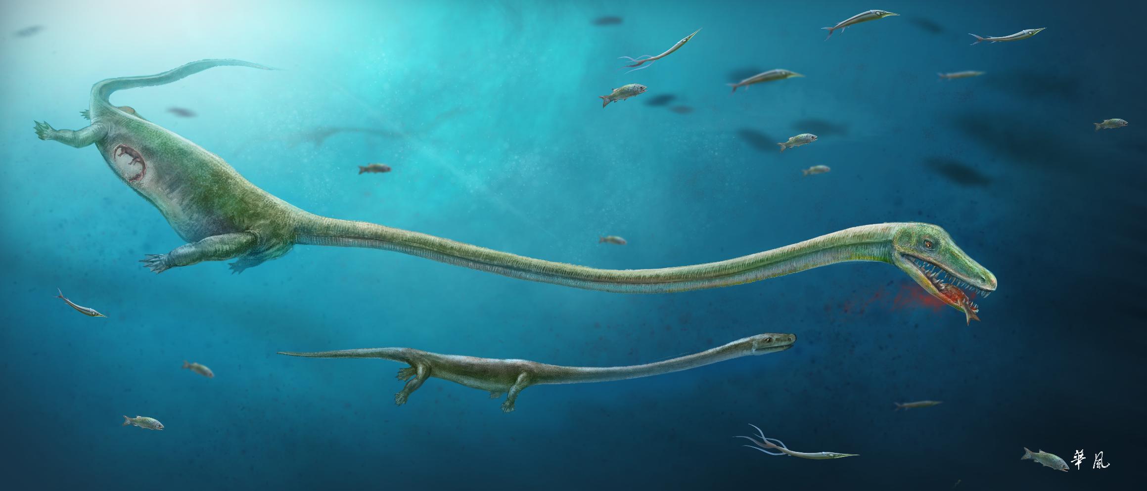 An artist's rendering of Dinocephalosaurus by Dinghua Yang & Jun Liu (press released image)