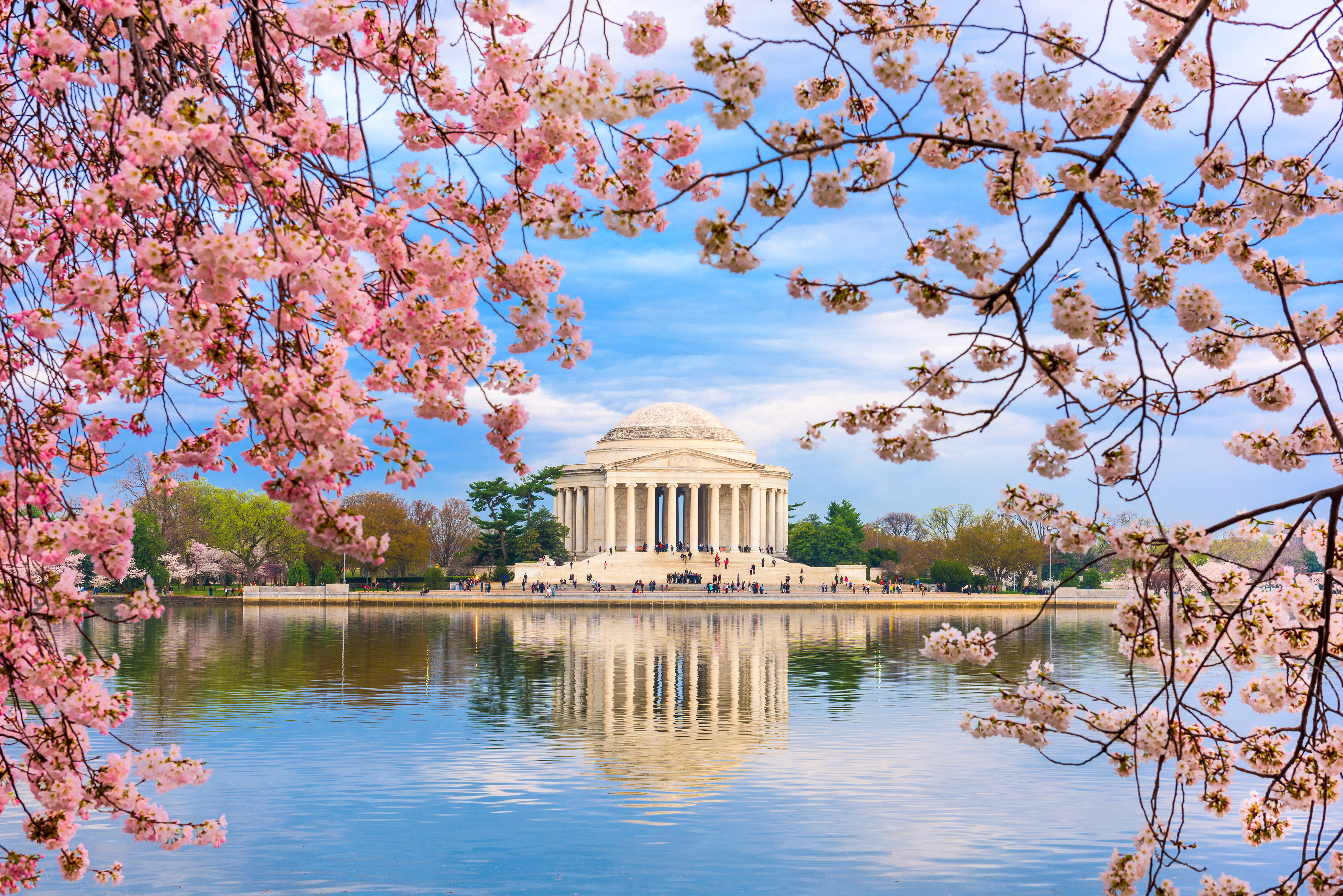 Cherry blossoms at the Thomas Jefferson Memorial