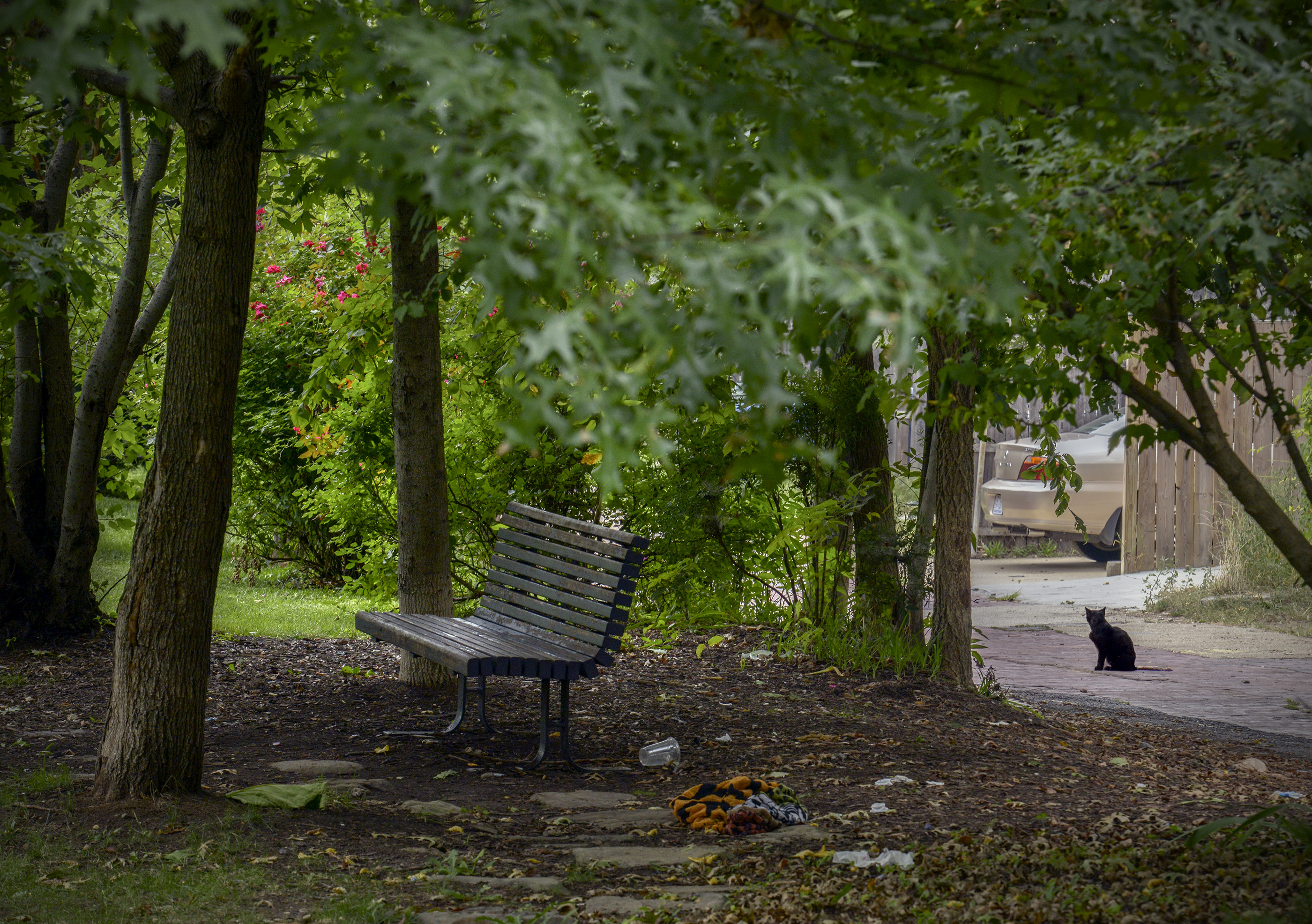Trees, a bench, and a black cat in Crispus Attucks Park, in Bloomingdale.