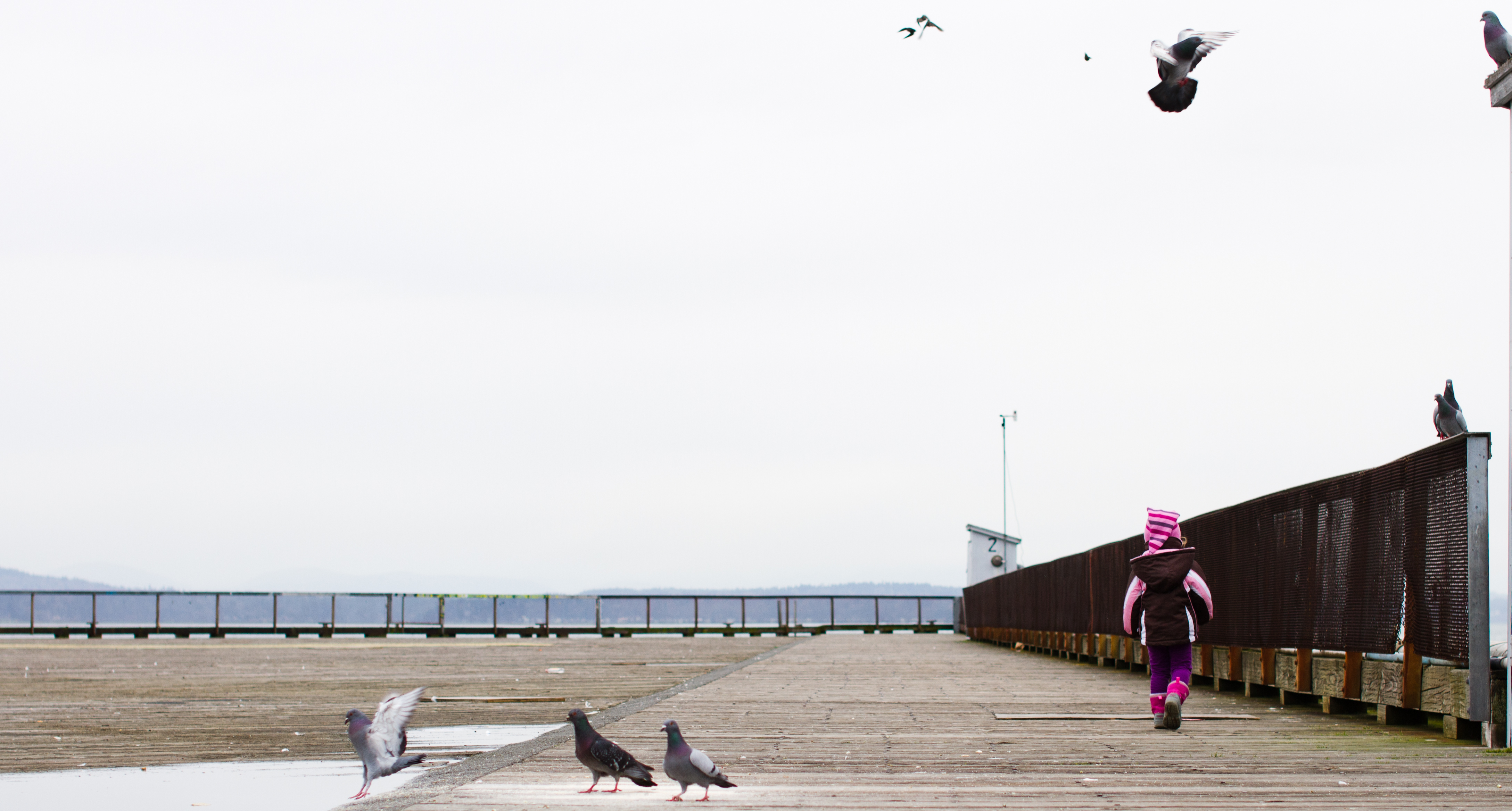 A large, flat, wooden pier on an overcast day. To the right, a young child dressed in pink runs ahead. Pigeons are all around, including three in the center of the foreground.