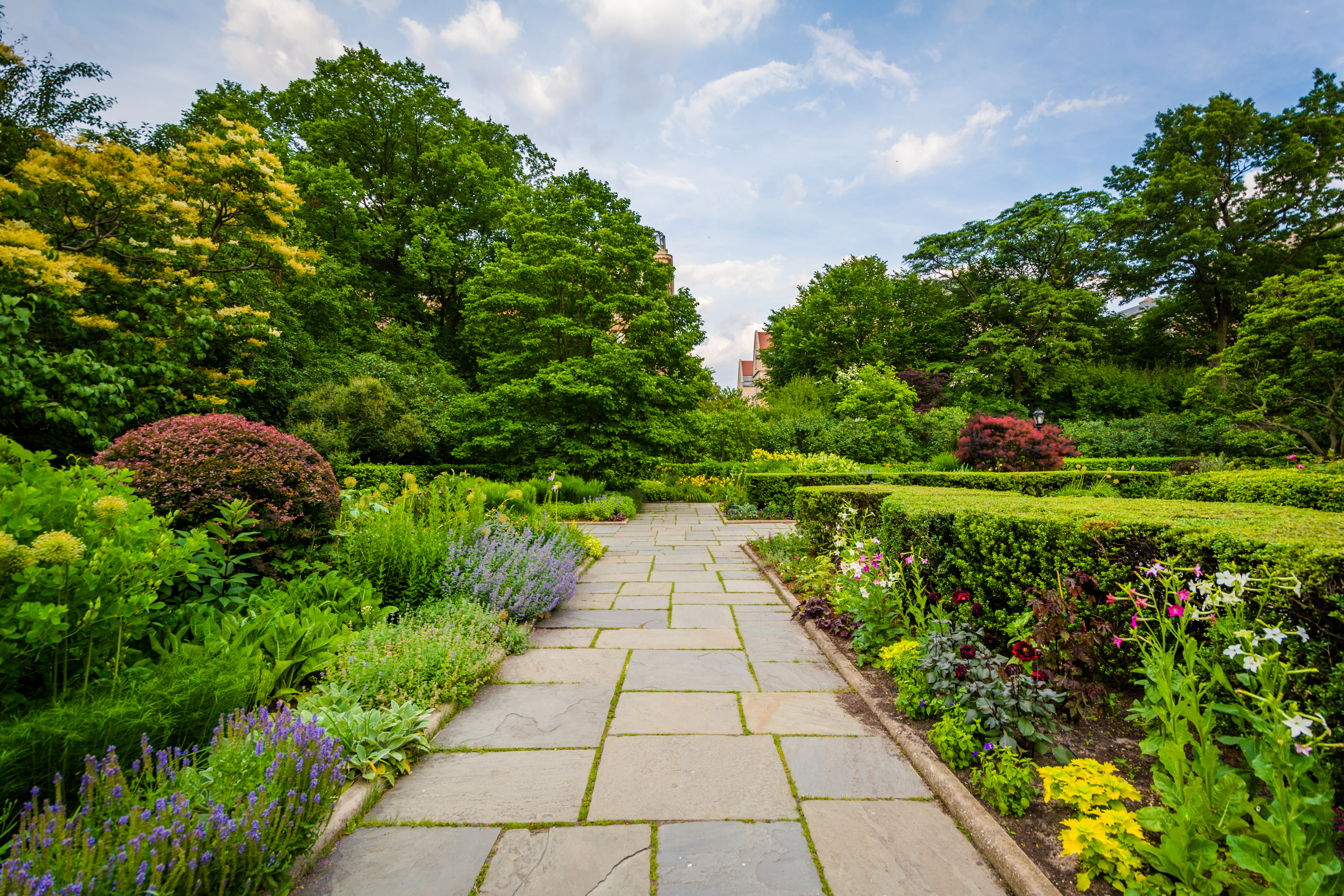 A garden path. On both sides of the path are various plants, flowers, and shrubbery. In the distance are trees.