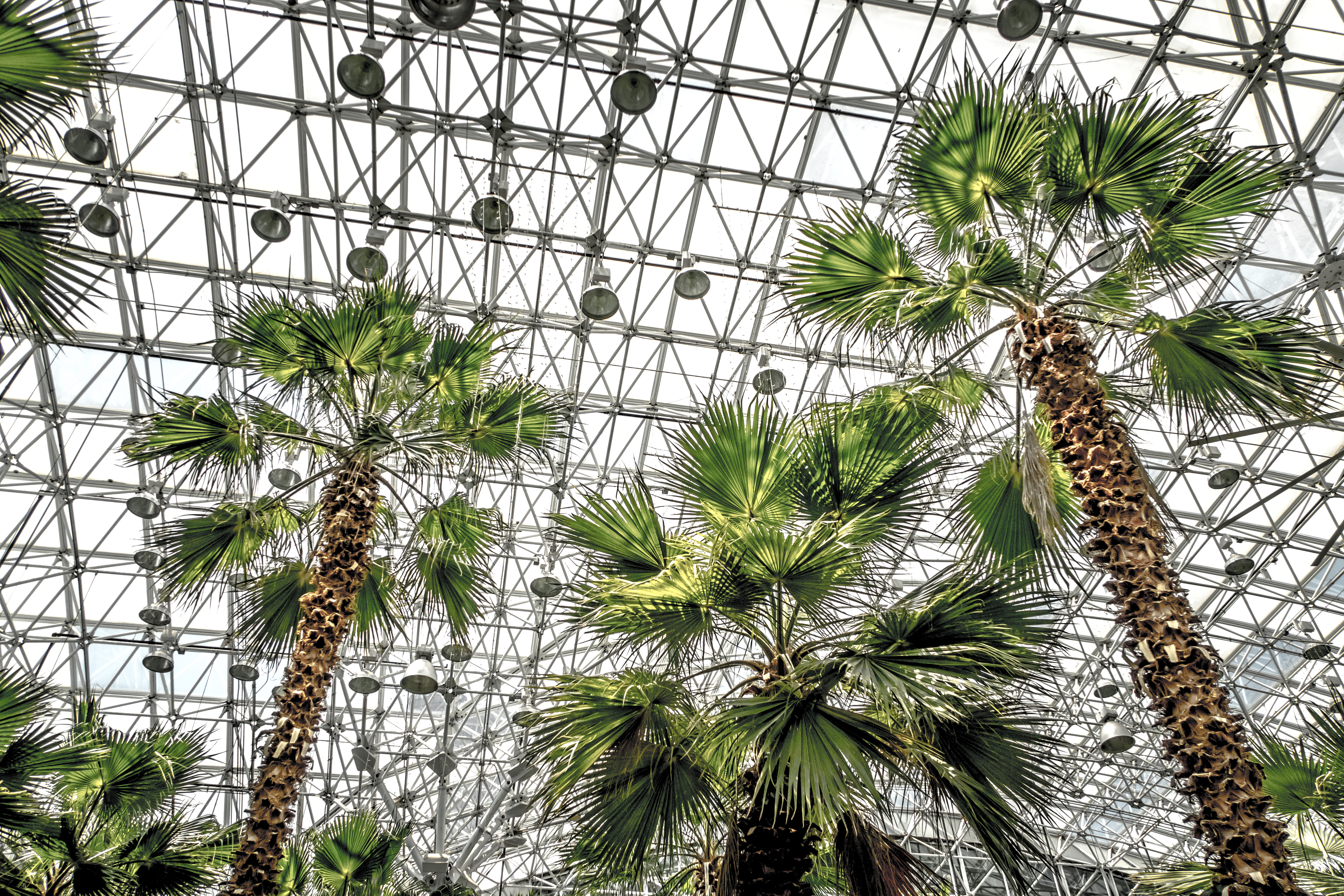Looking up at the roof a glass atrium filled with towering palm trees and other tropical vegetation.