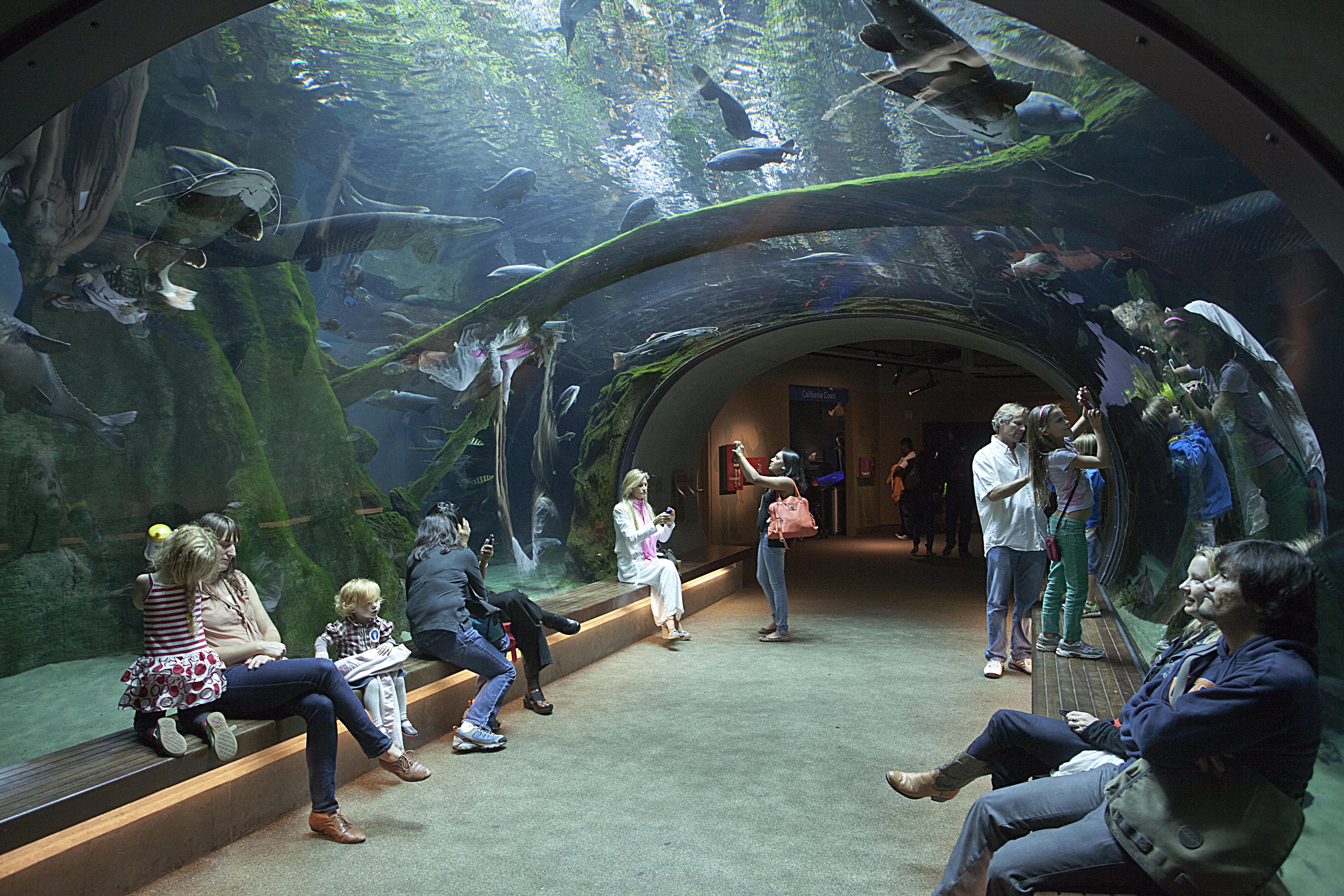 The aquarium in the California Academy of Sciences in Golden Gate Park.