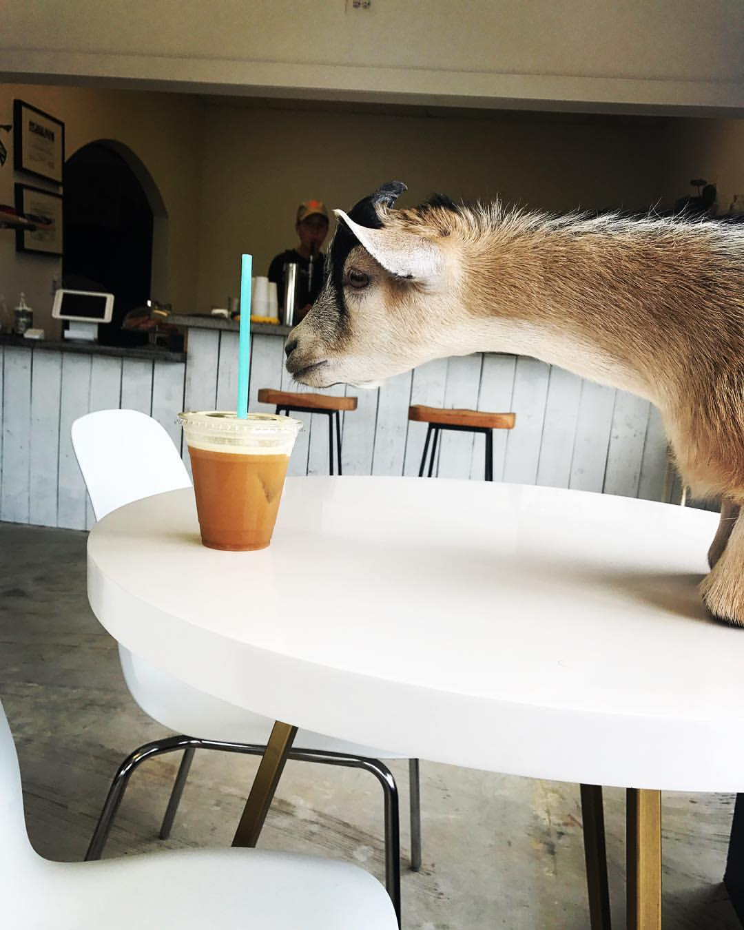 Civil Goat Coffee Co.'s mascot Butters