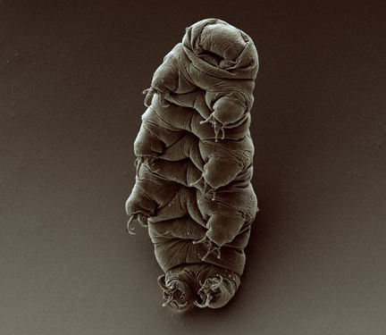 Tardigrades are the toughest animals on Earth. What would it take to kill them all?