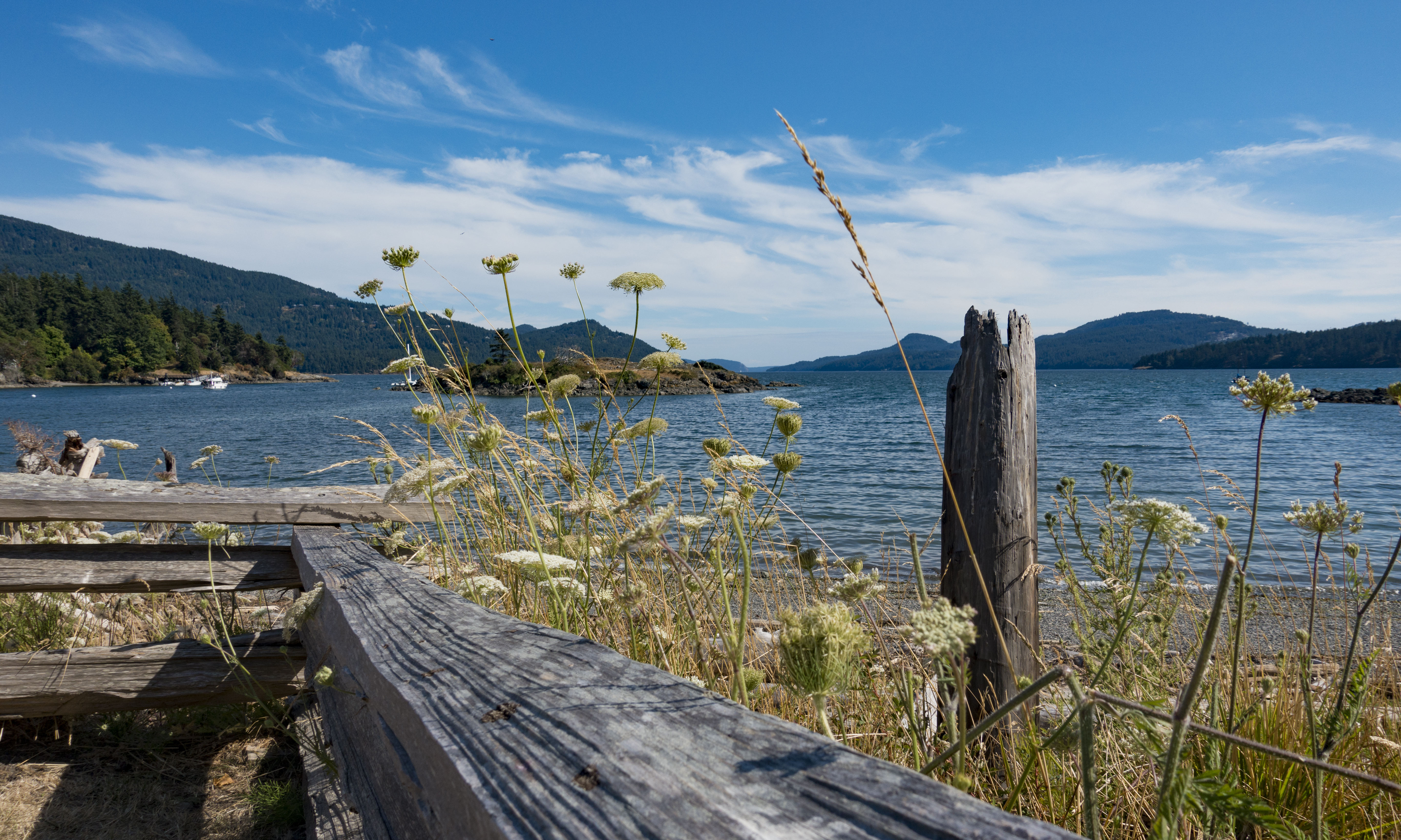 In the foreground is driftwood and wild flowers. In the distance is a body of water and mountains.
