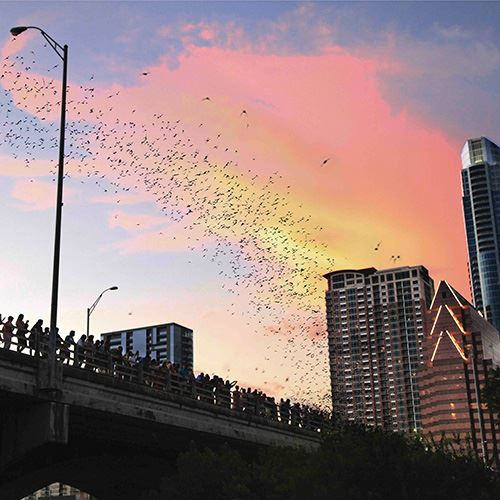 A photo of bats flying with sunset in background