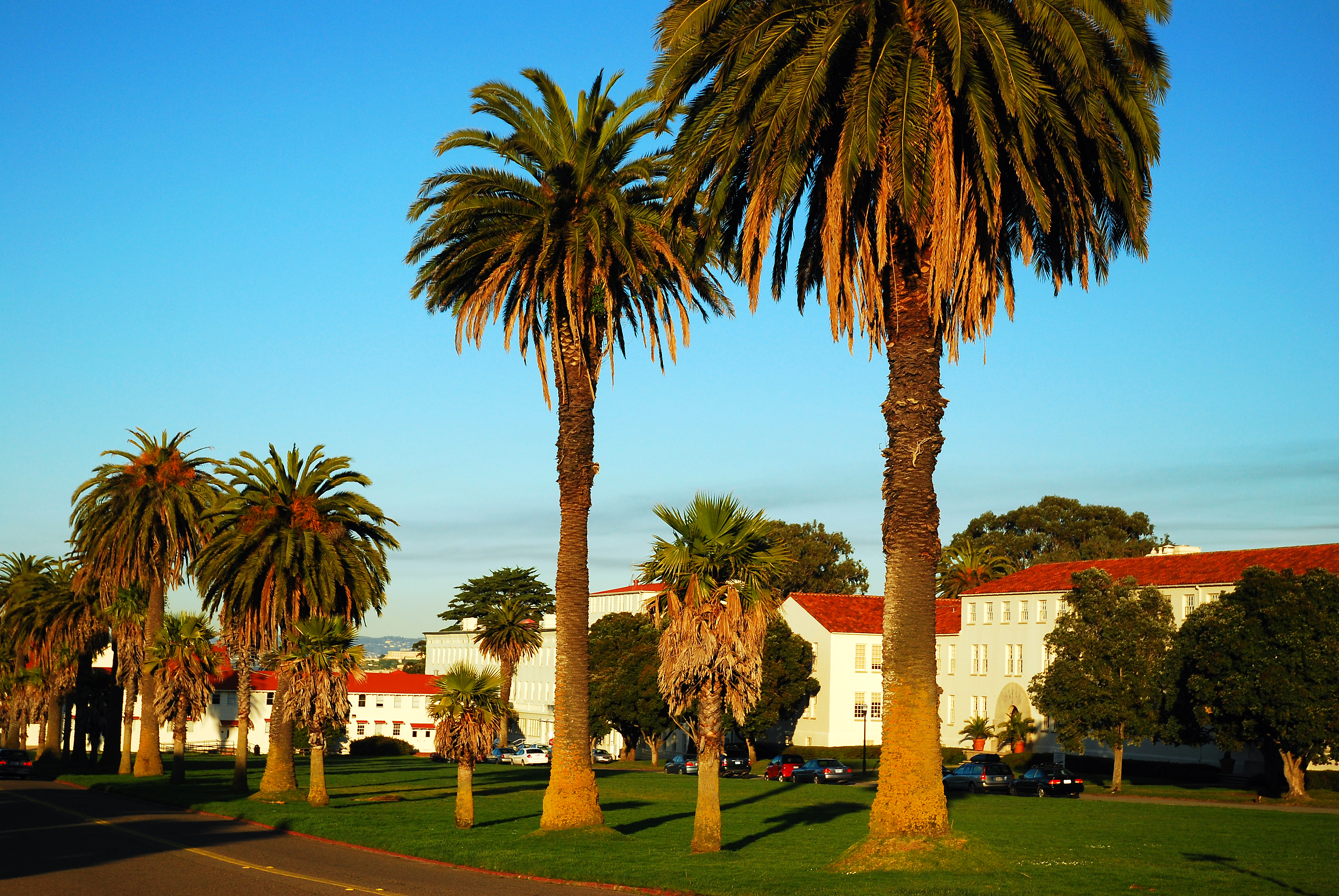 Palm trees and buildings with tile roofs in the Presidio.