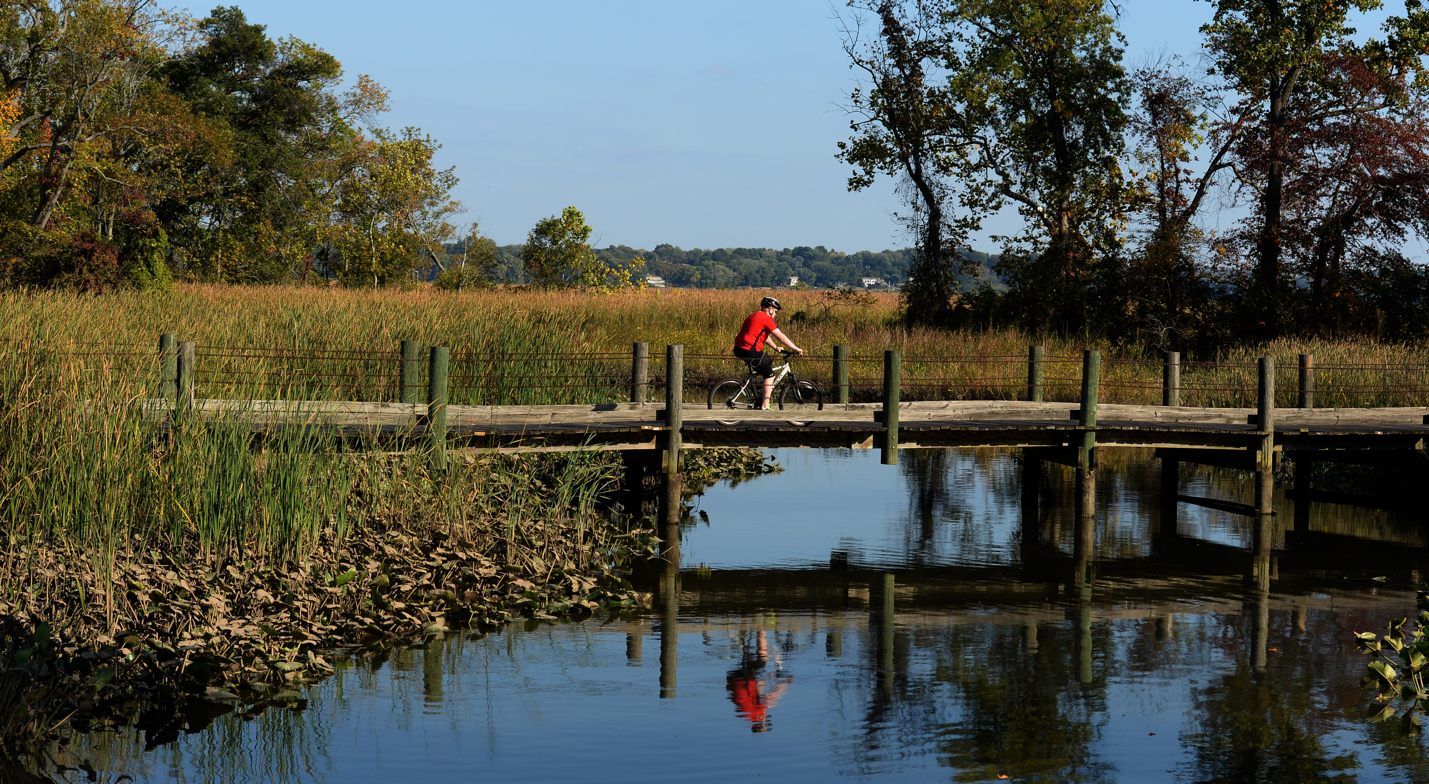 A cyclist rides across a bike trail bridge over a marsh. There is growth and trees in the background.