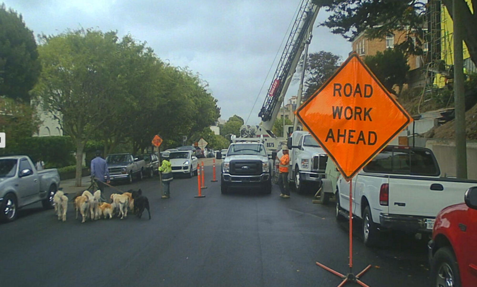A self-driving car on a San Francisco street is confronted by roadwork and a dogwalker and his pack.