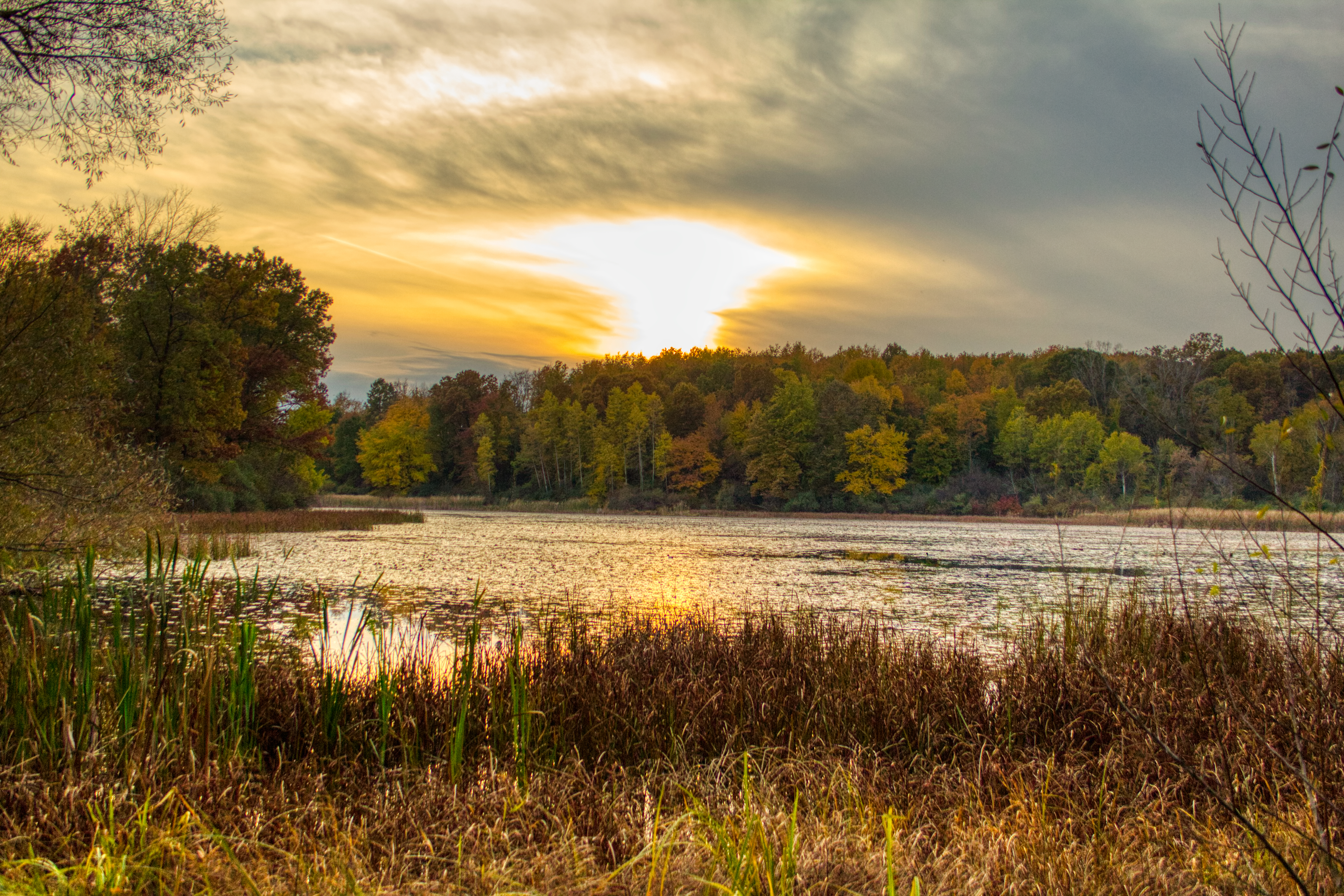 In the foreground is wild grass that borders a body of water. On the other side of the body of water are many multicolored trees. There is a sunset in the sky.