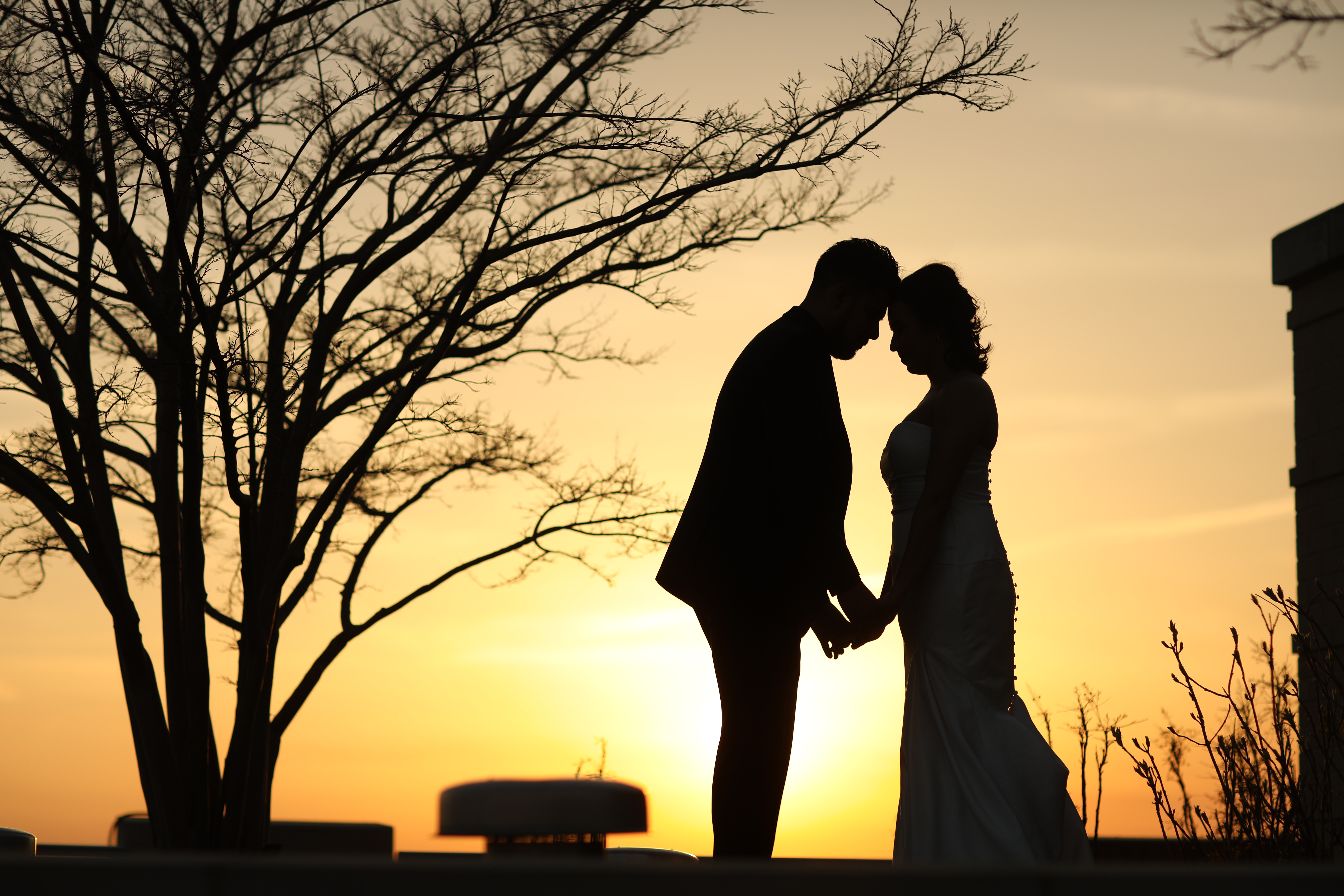 Two people embracing near a tree at sunset.