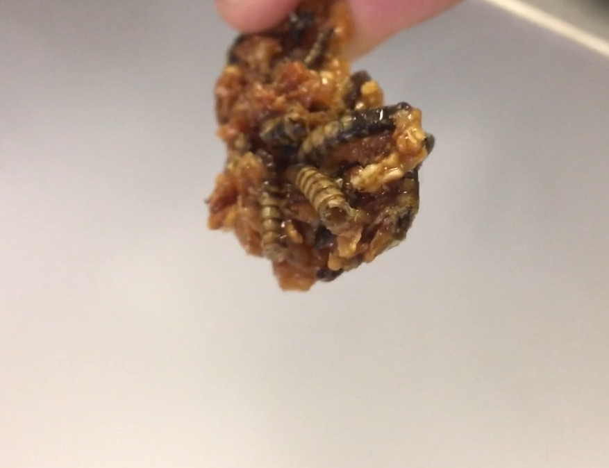 Coconut-toffee-mealworm brittle