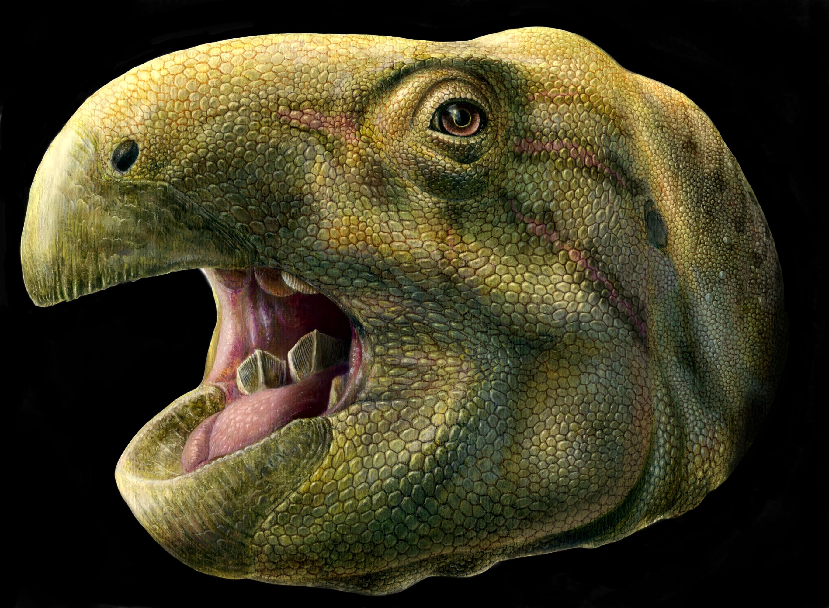 An artistic reconstruction of Matheronodon provincialis's head. Say aaahhhhh.