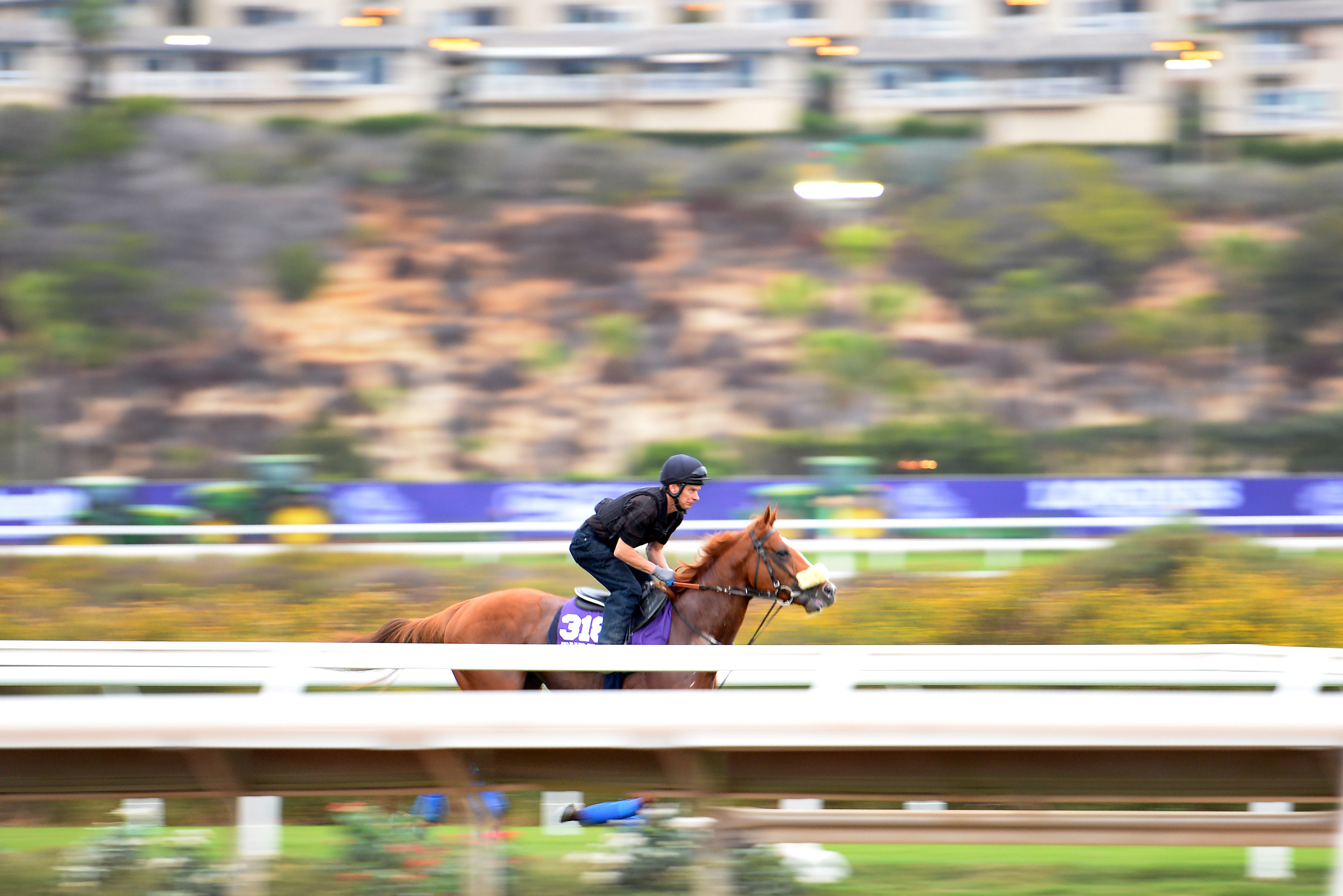 Horse Racing: 34th Breeders Cup-Workouts