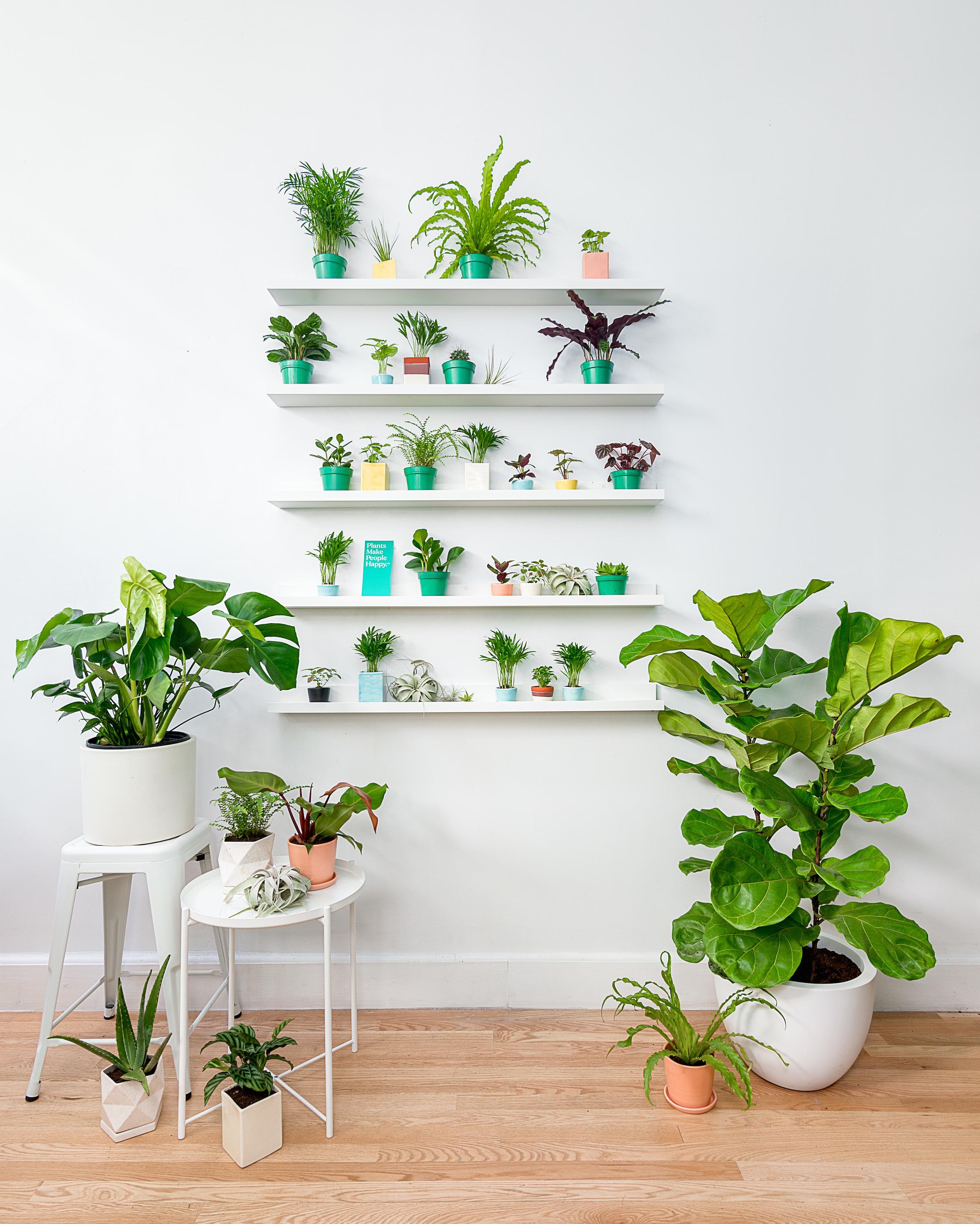 houseplants on shelves