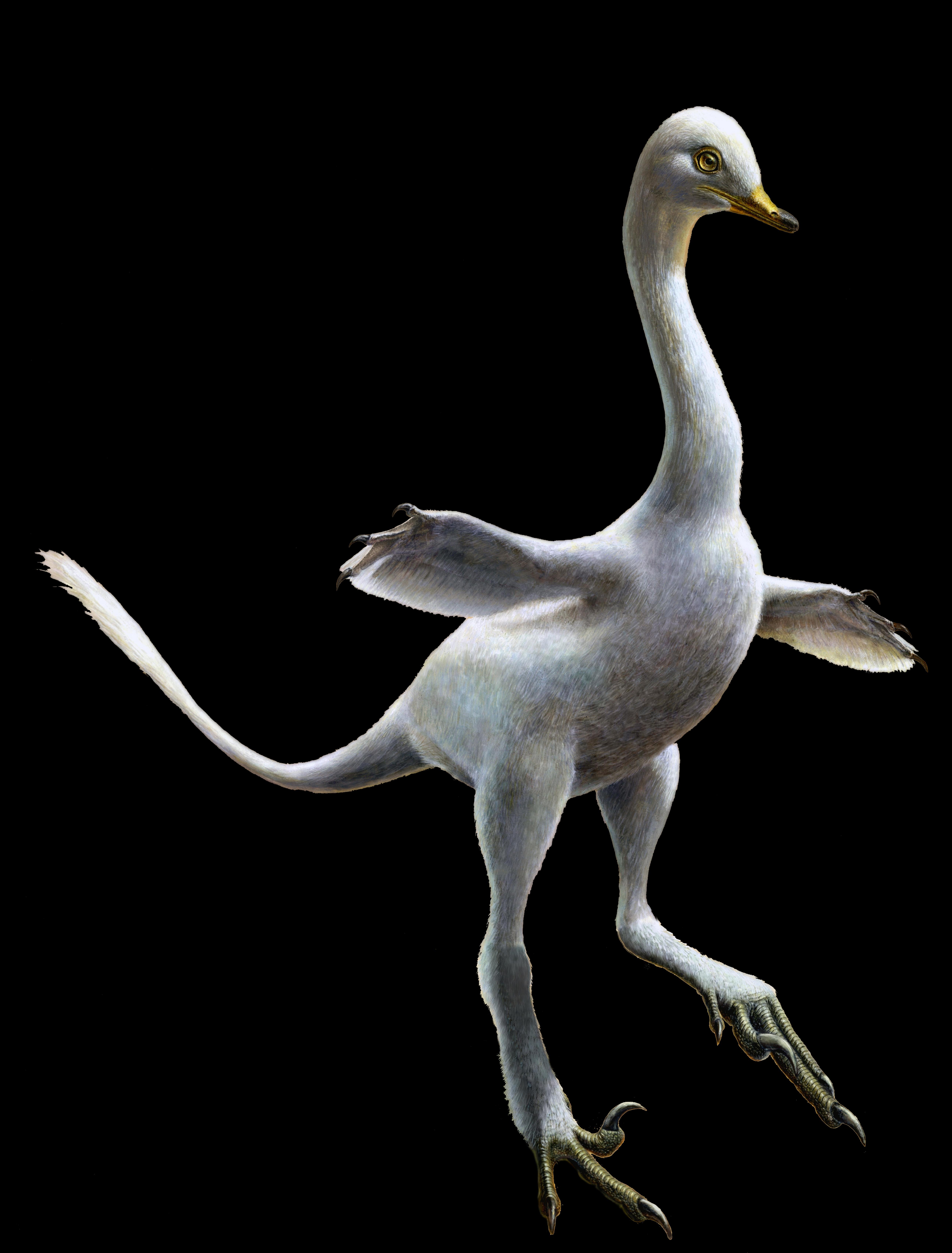 An artist's rendering of Halszkaraptor, an amphibious relative of Velociraptor.