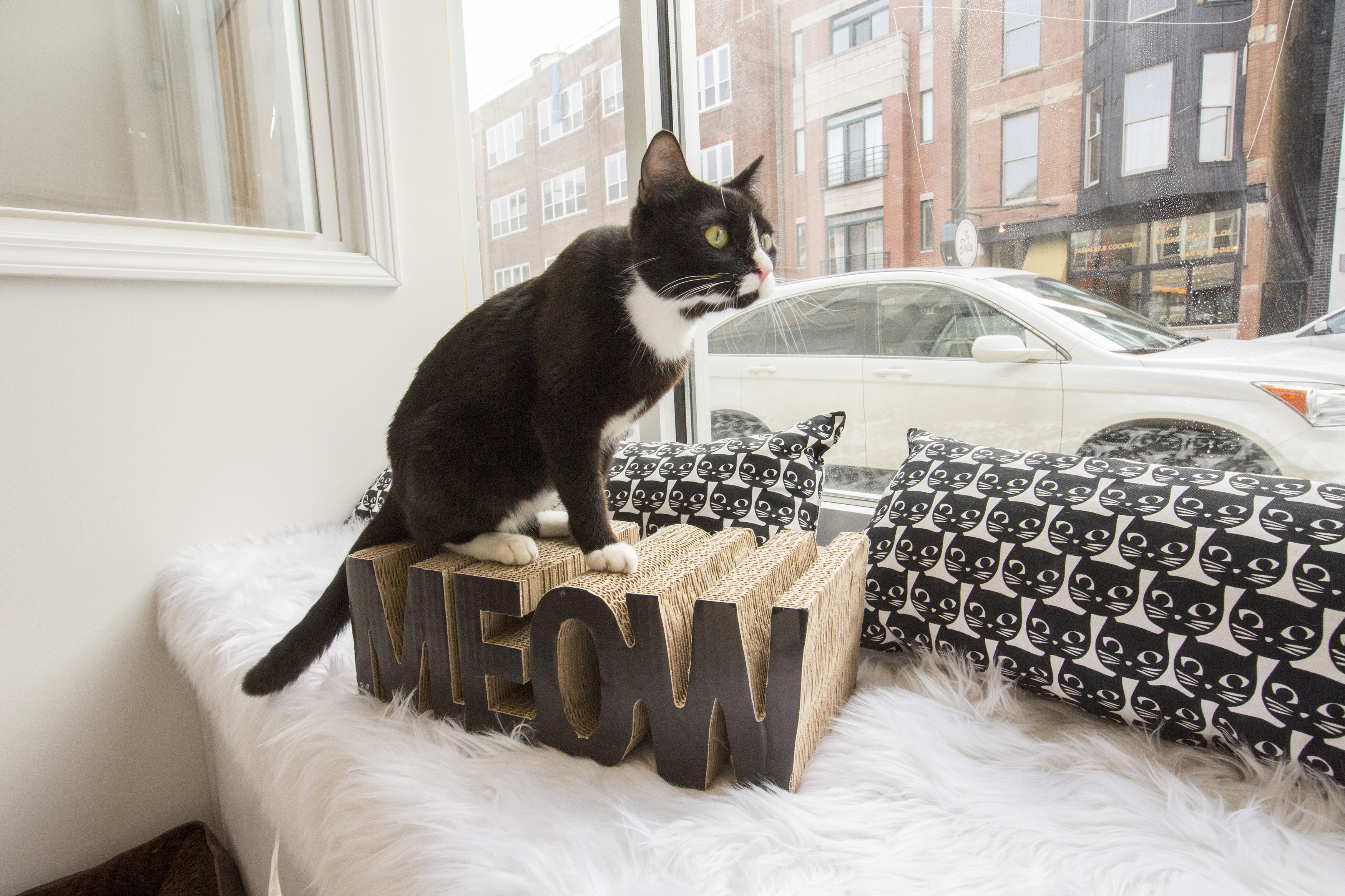 """A black and white cat sits on top of a scratching box shaped into the word """"meow"""" and looks out a window onto a Chicago street"""