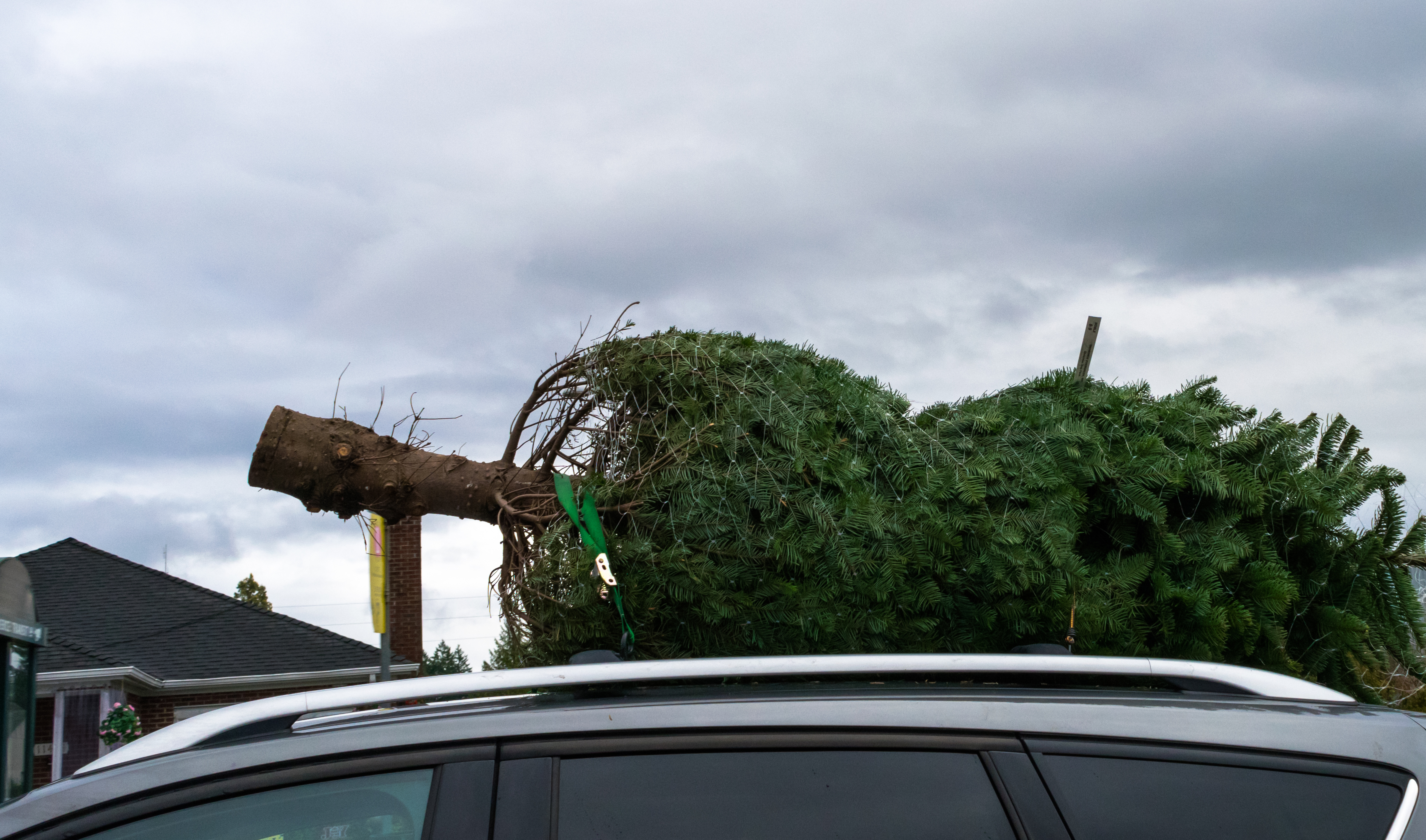 A Christmas tree on top of a car