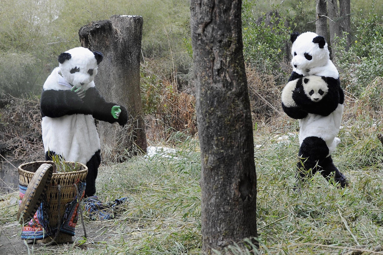 c1eed036a Saving the Pandas Means Dressing Like a Panda - Racked