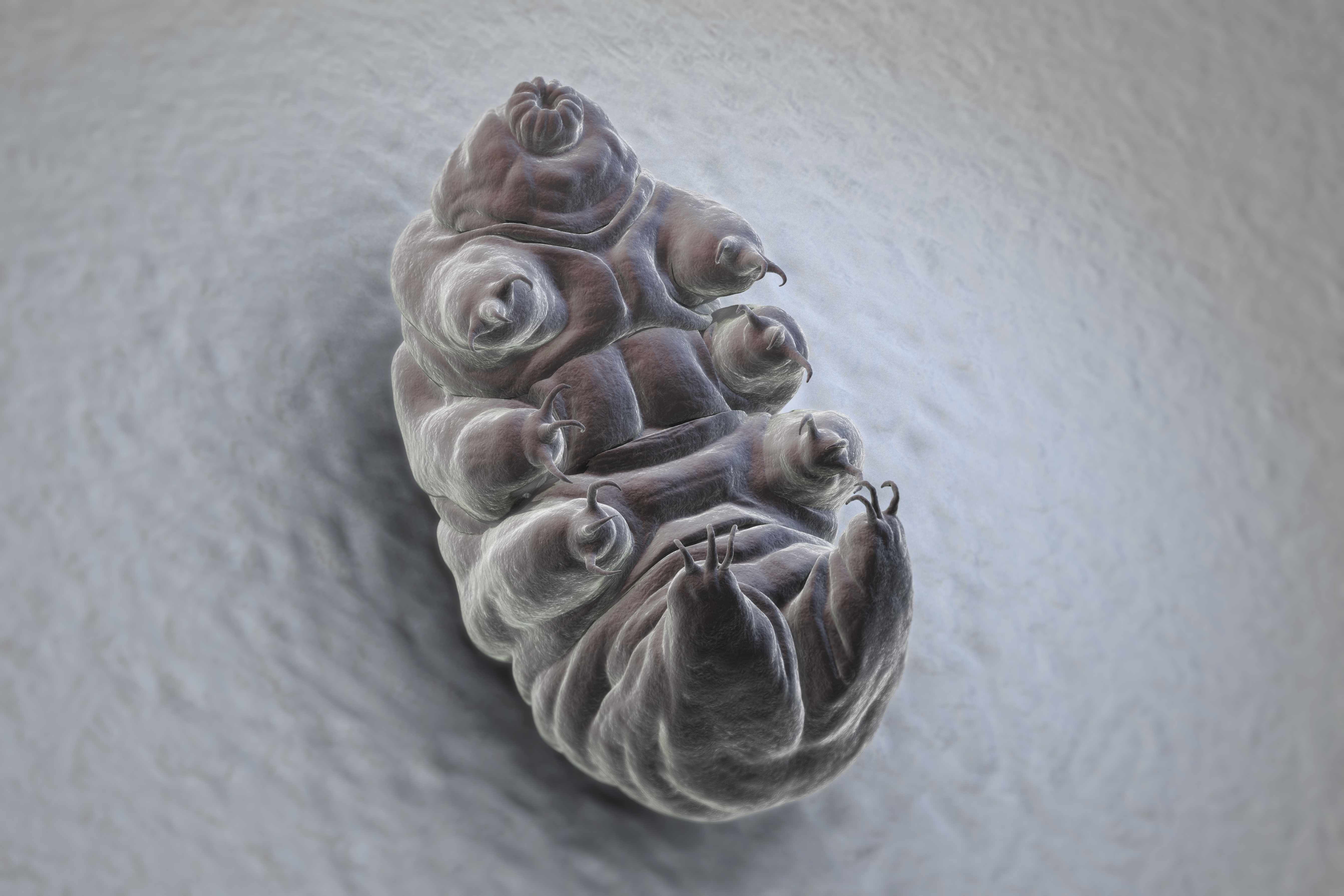 Tardigrades — the microscopic, oddly cute toughest animals on Earth — explained