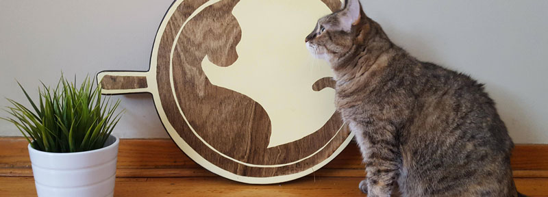 Minnesota's First Cat Cafe Opens This Friday
