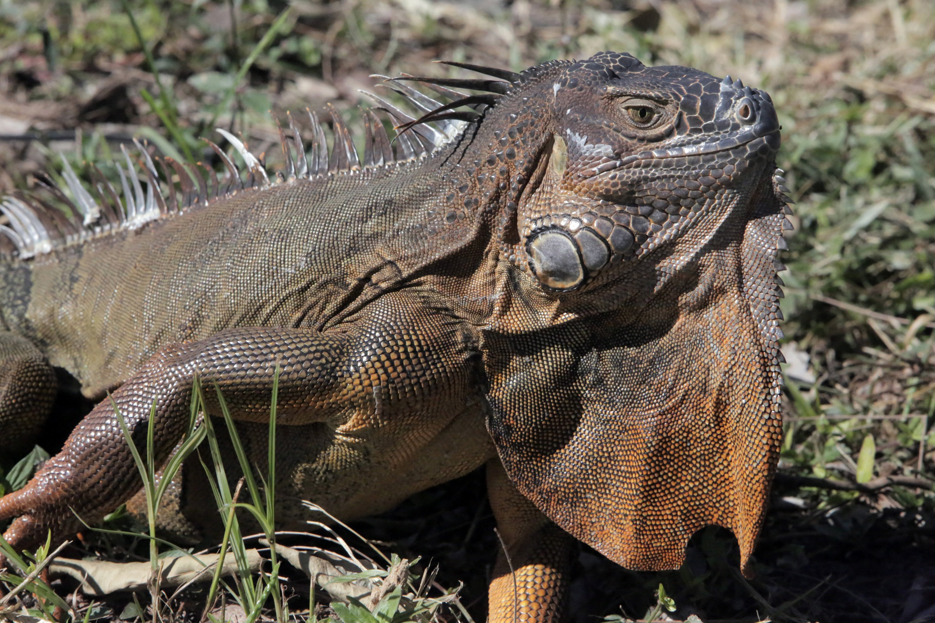 Snow-covered beaches? Chilly iguanas? They are part of a mysterious âholeâ in global warming