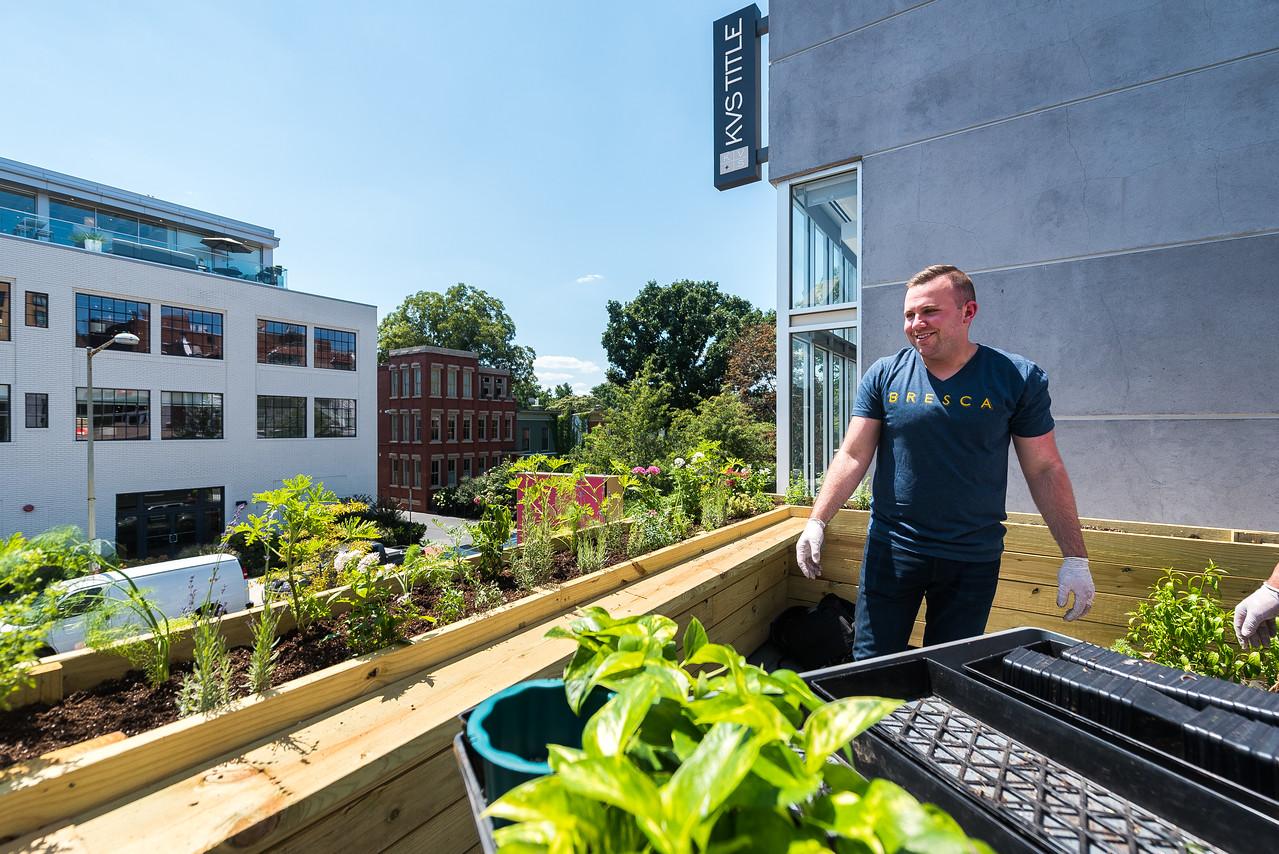 Jont chef Ryan Ratino on his rooftop garden