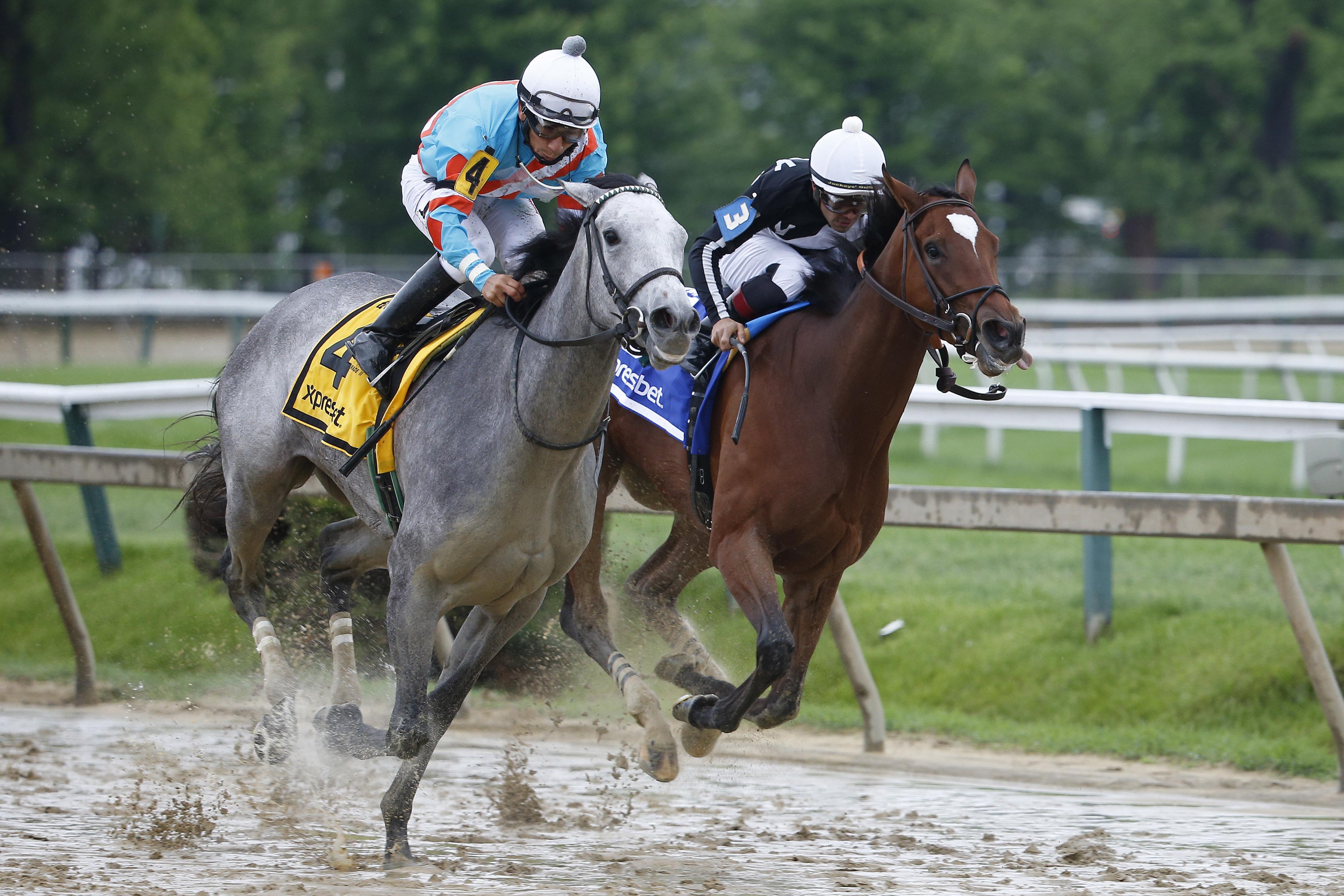 Horse Racing: Black-Eyed Susan