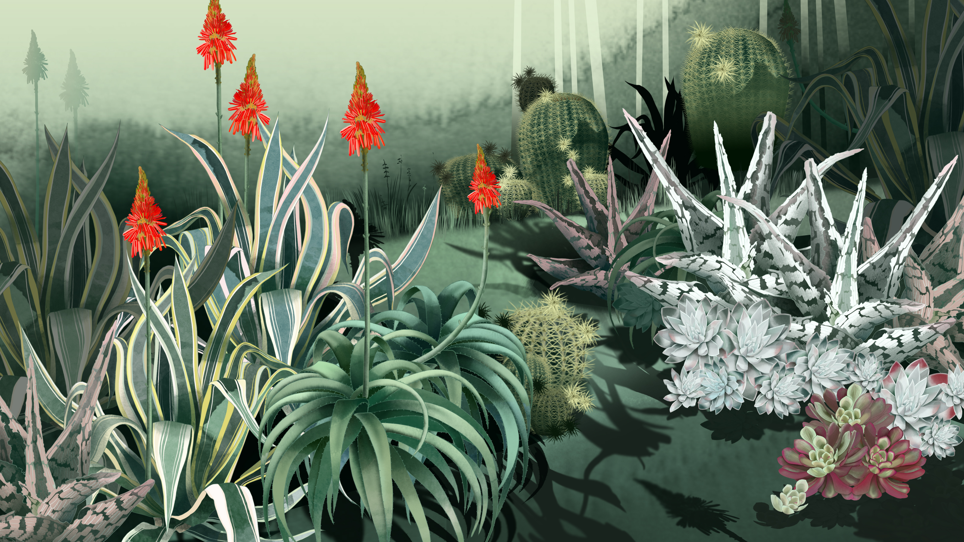 Consider The Cactus How Succulents Took Over The World The Ringer