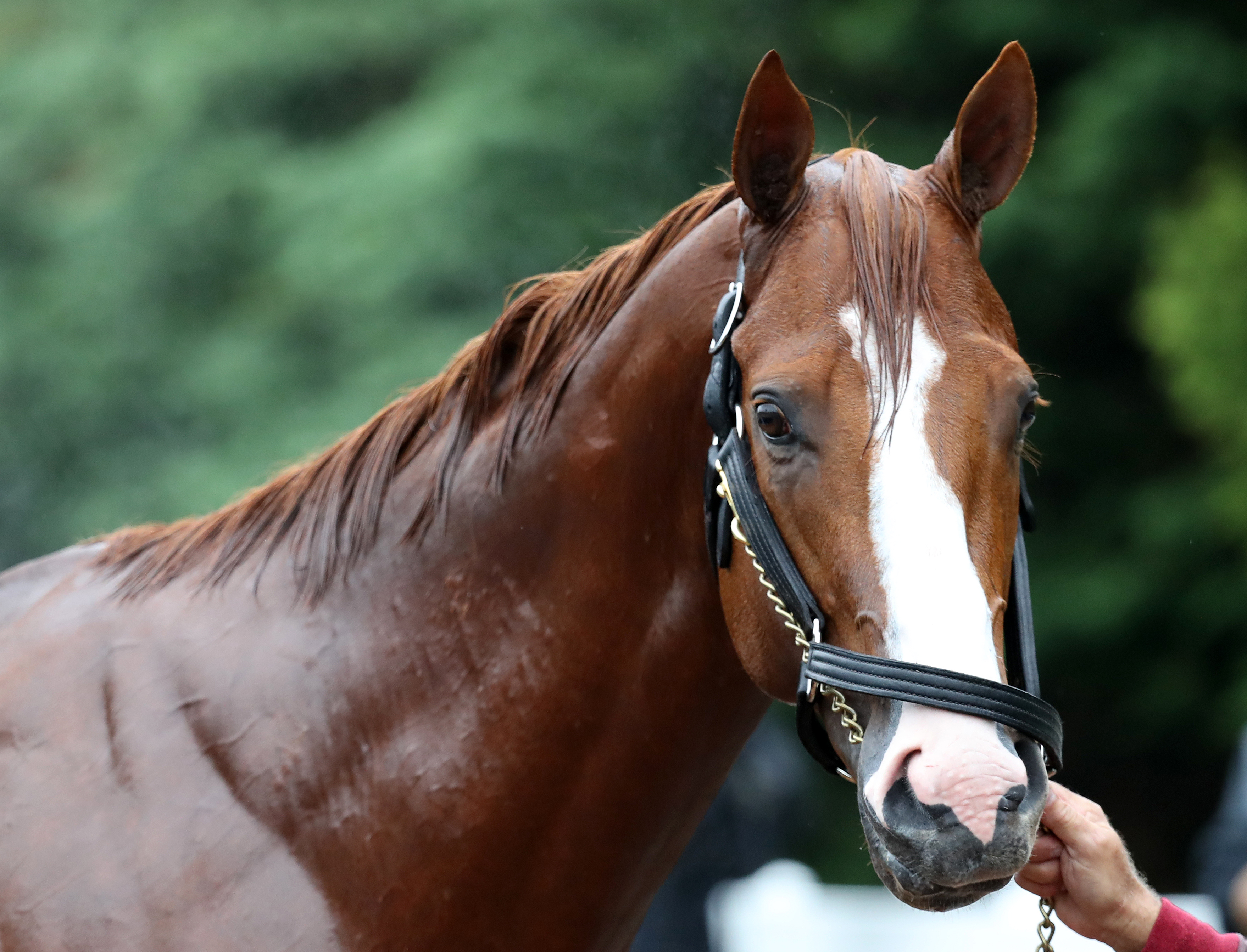 Preakness Stakes Previews