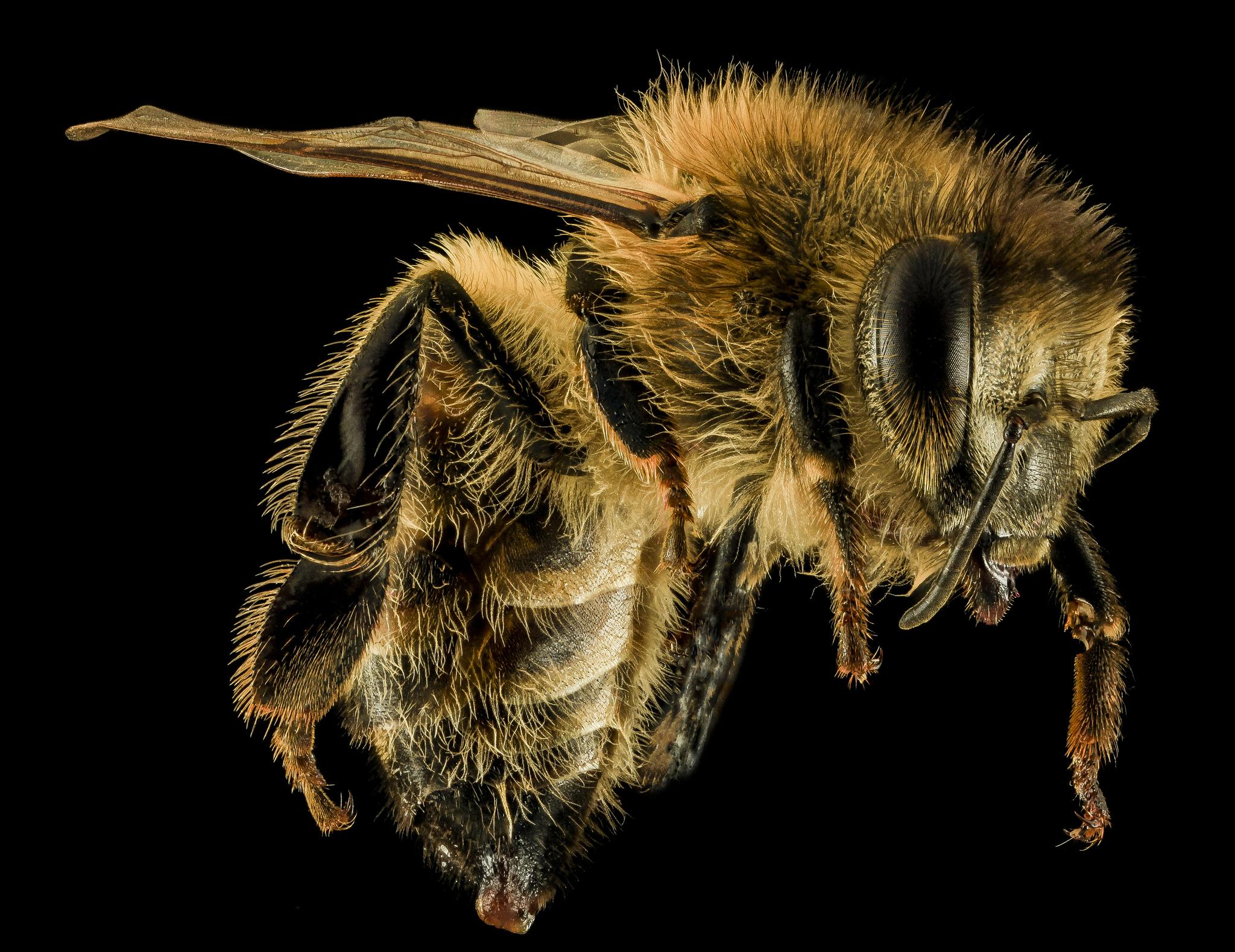 Honey bees can understand the surprisingly complex concept of zero