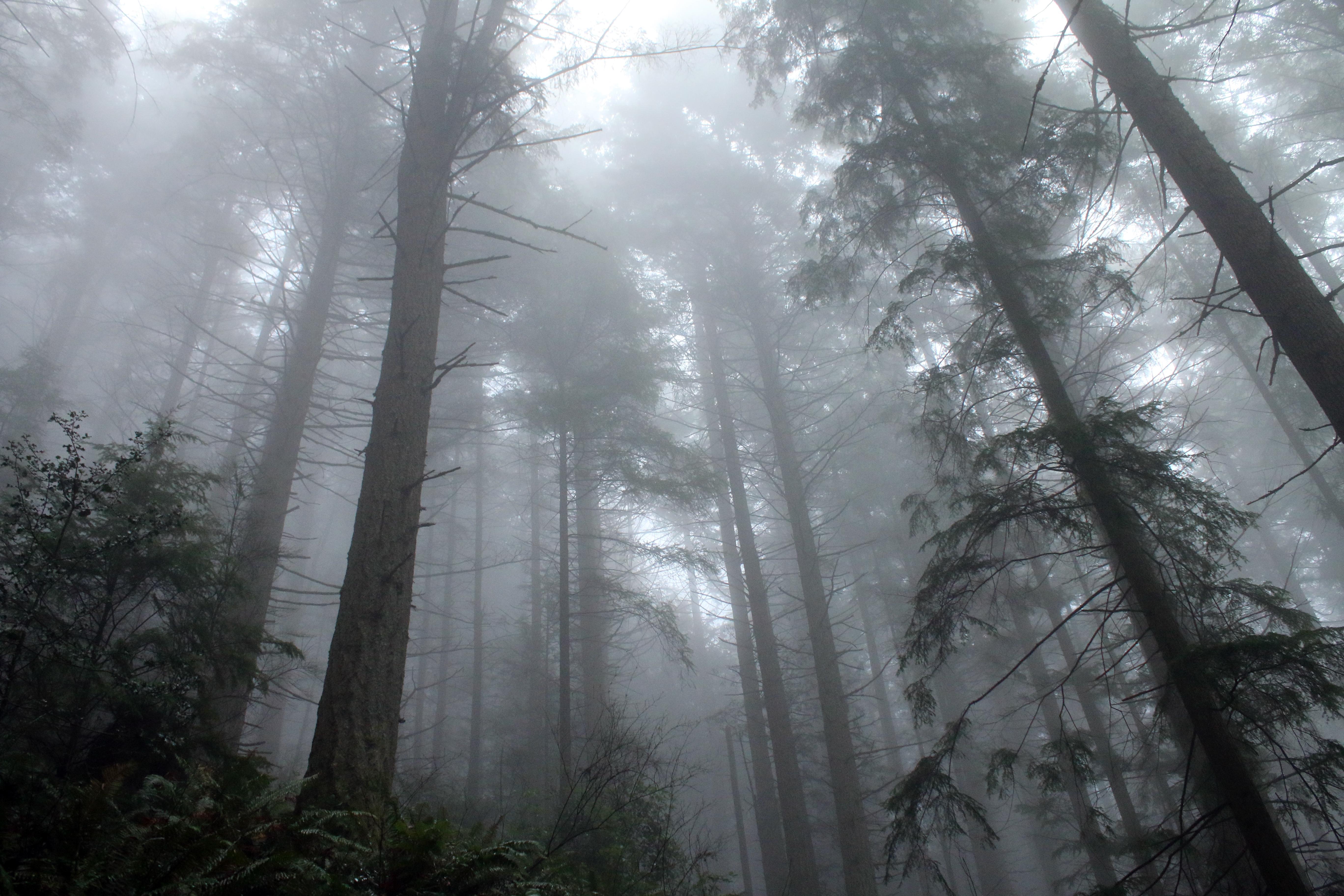 Liminal Seattle maps the Northwest's strange and metaphysical happenings