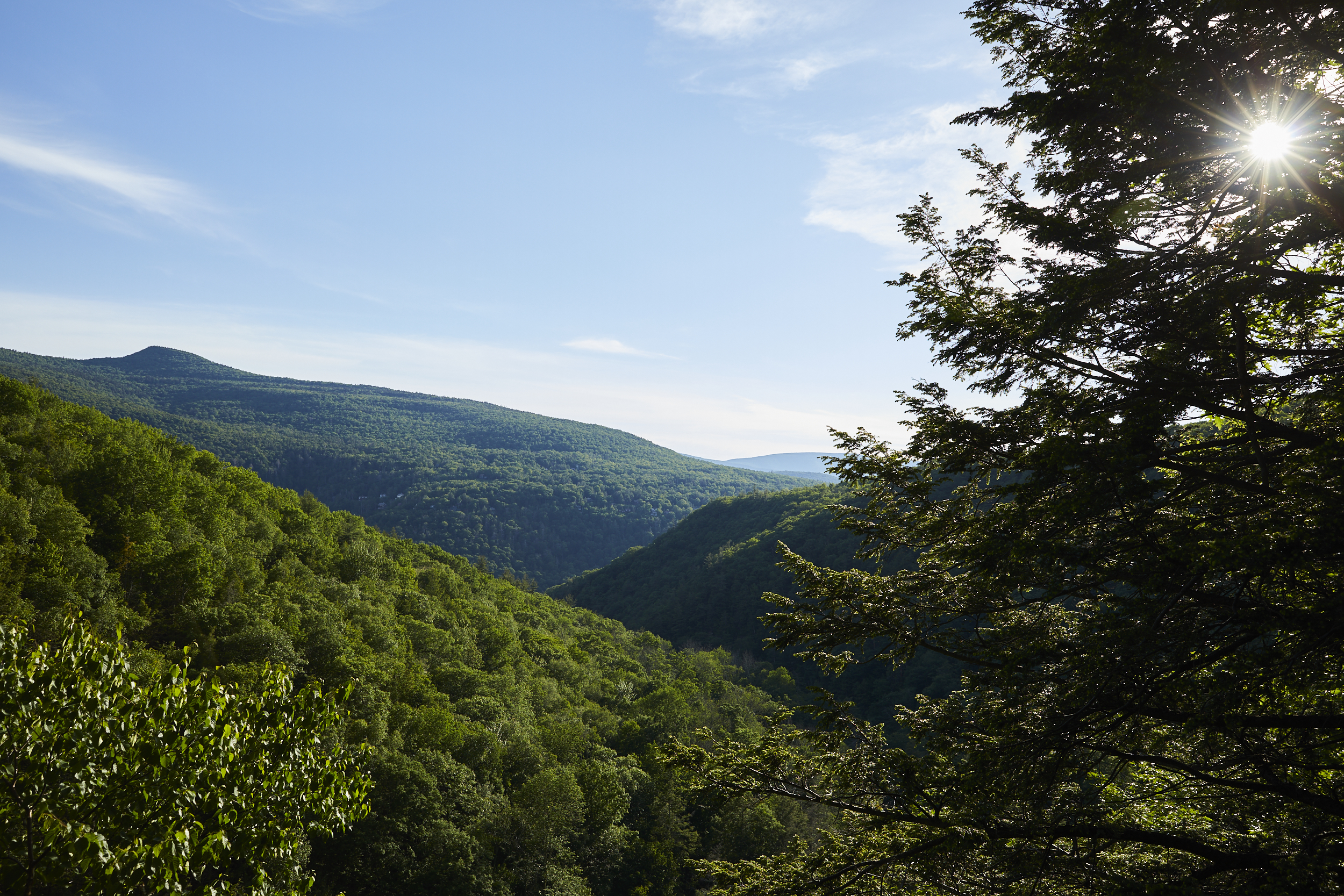 Mountains and hills covered in trees. There is a tree in the foreground. The sky is clear and blue.