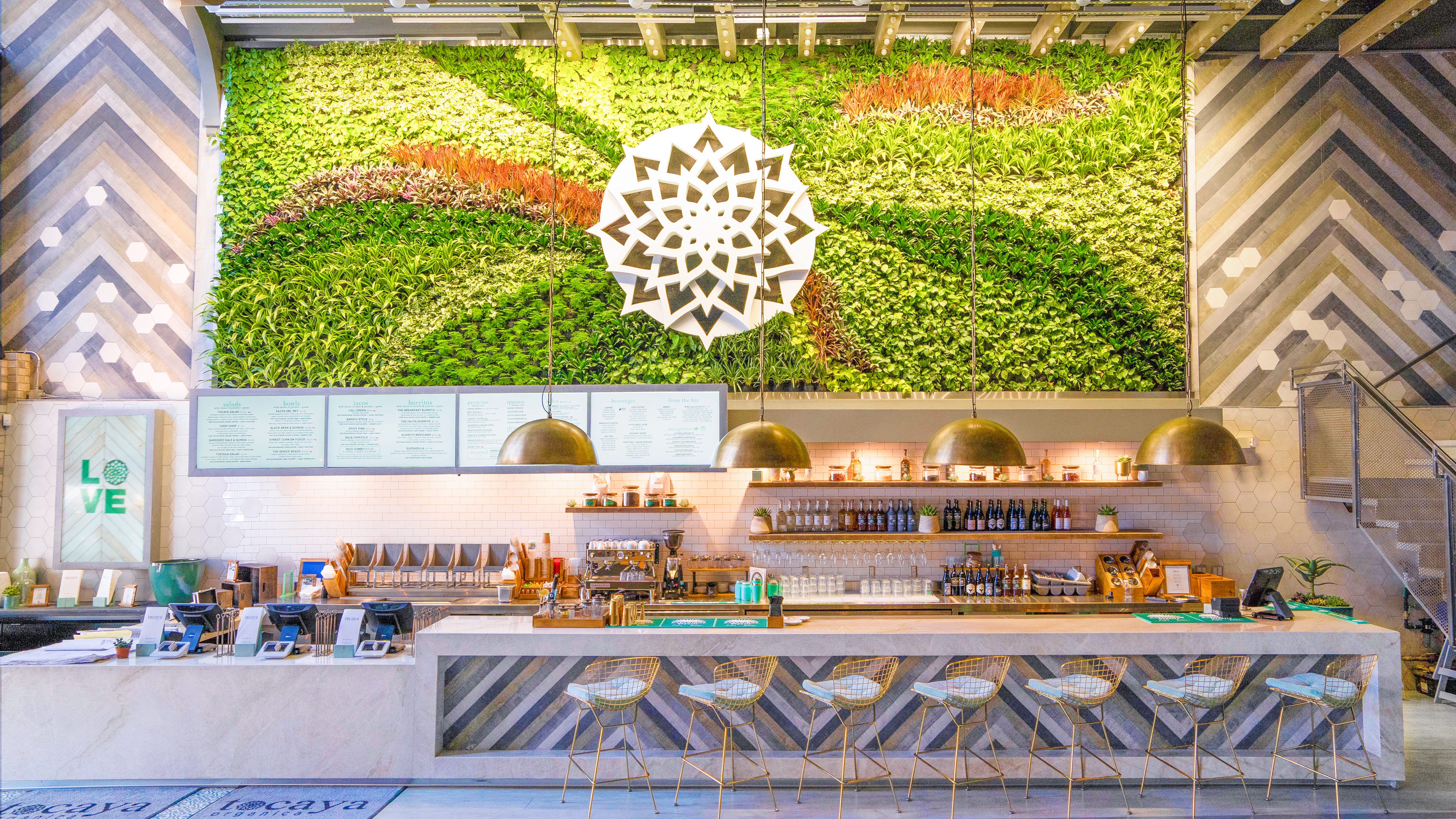 The succulent wall at Tocaya Organica