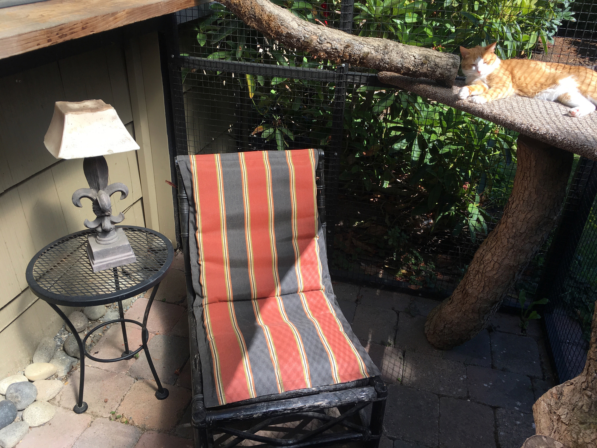 How A Seattle Designer Builds Safe, Outdoor Spaces For Cats