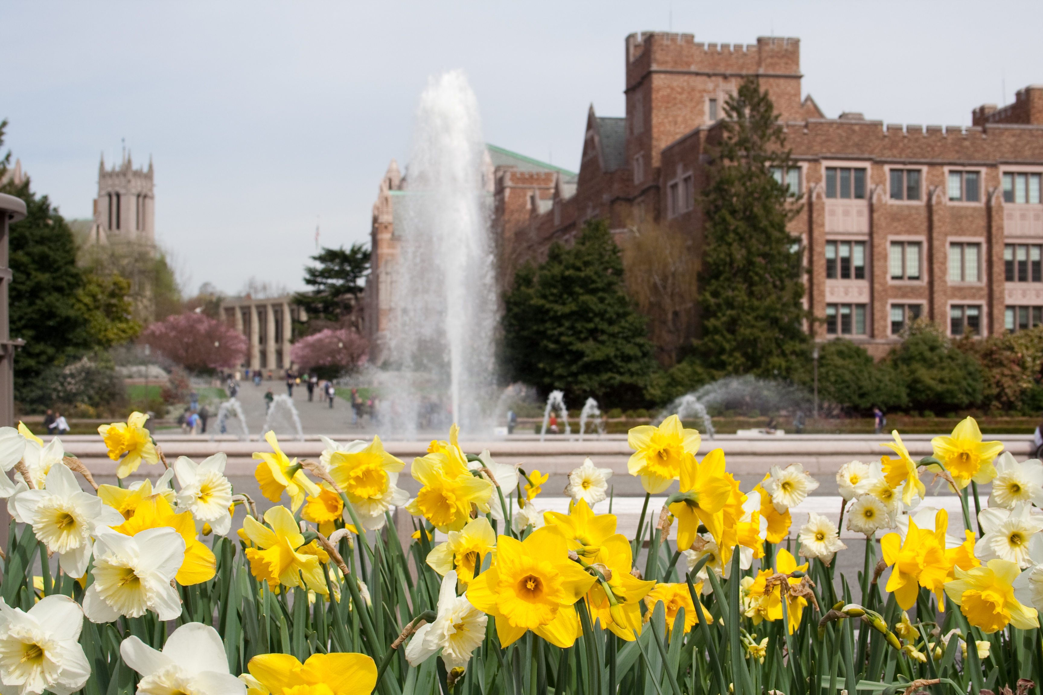 In the foreground are yellow flowers. In the distance is a water fountain and a row of university buildings.