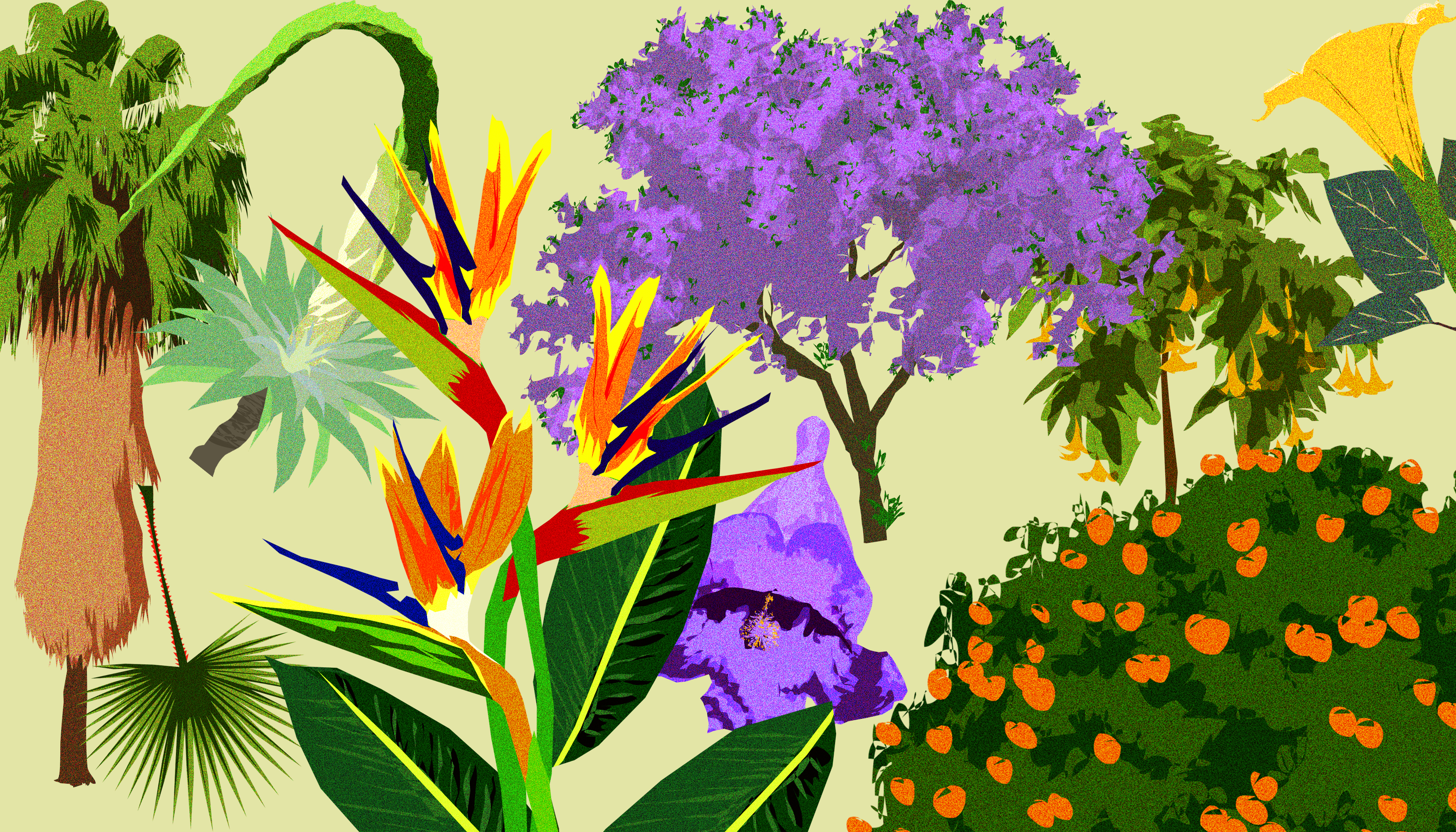 An illustrated guide to Los Angeles trees and flowers
