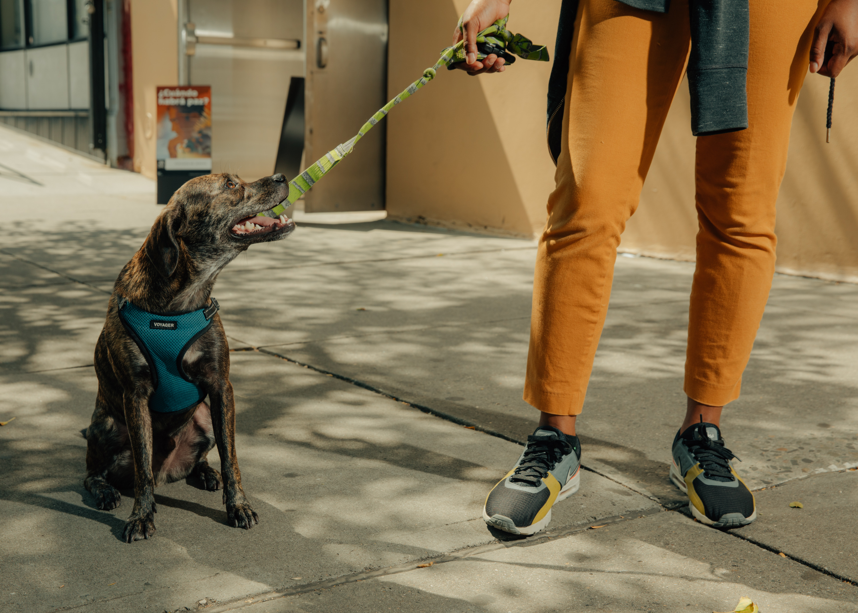 The startup world's cuddly, cutthroat battle to walk your dog