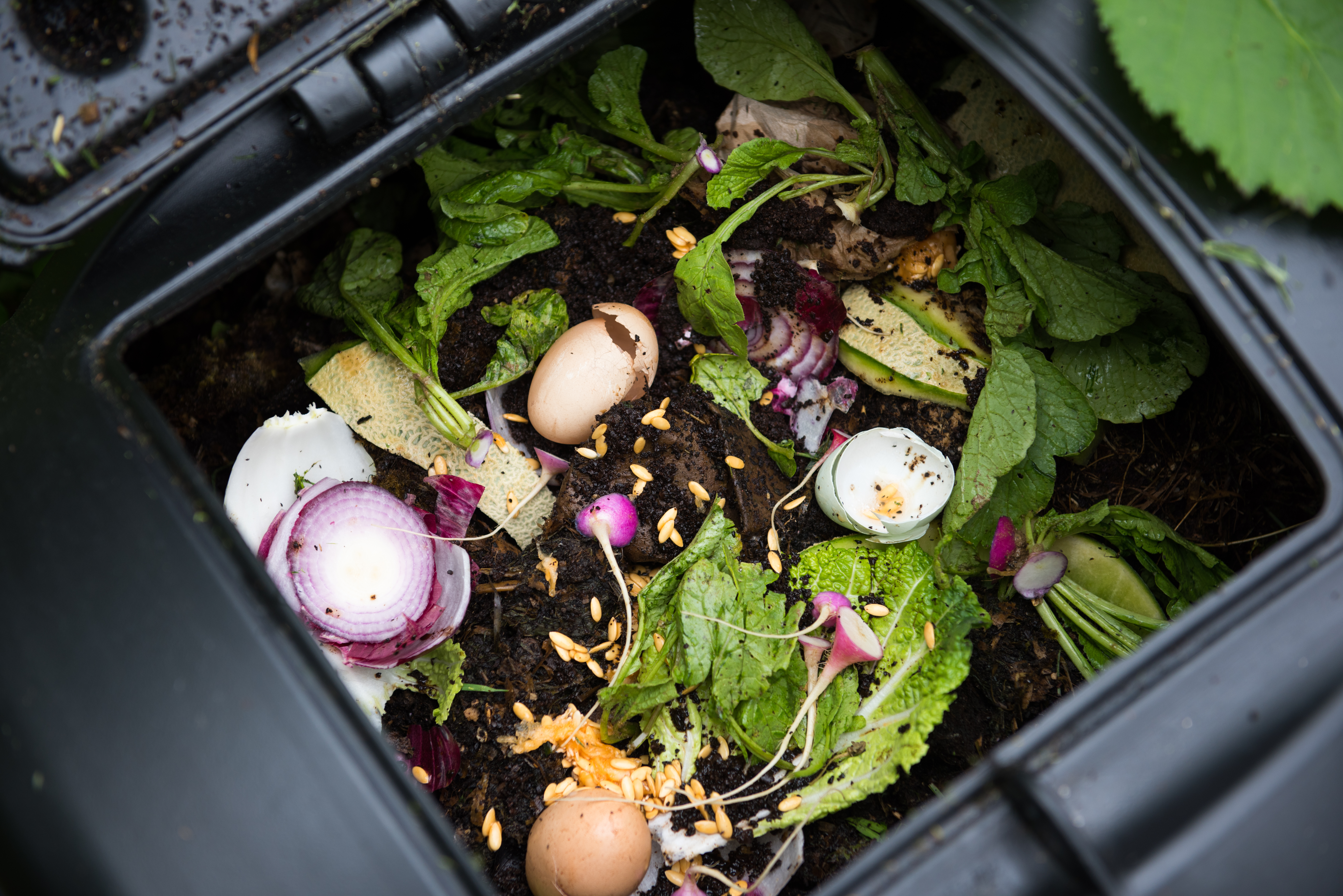 Austin Restaurants Can't Throw Away Food Waste Anymore