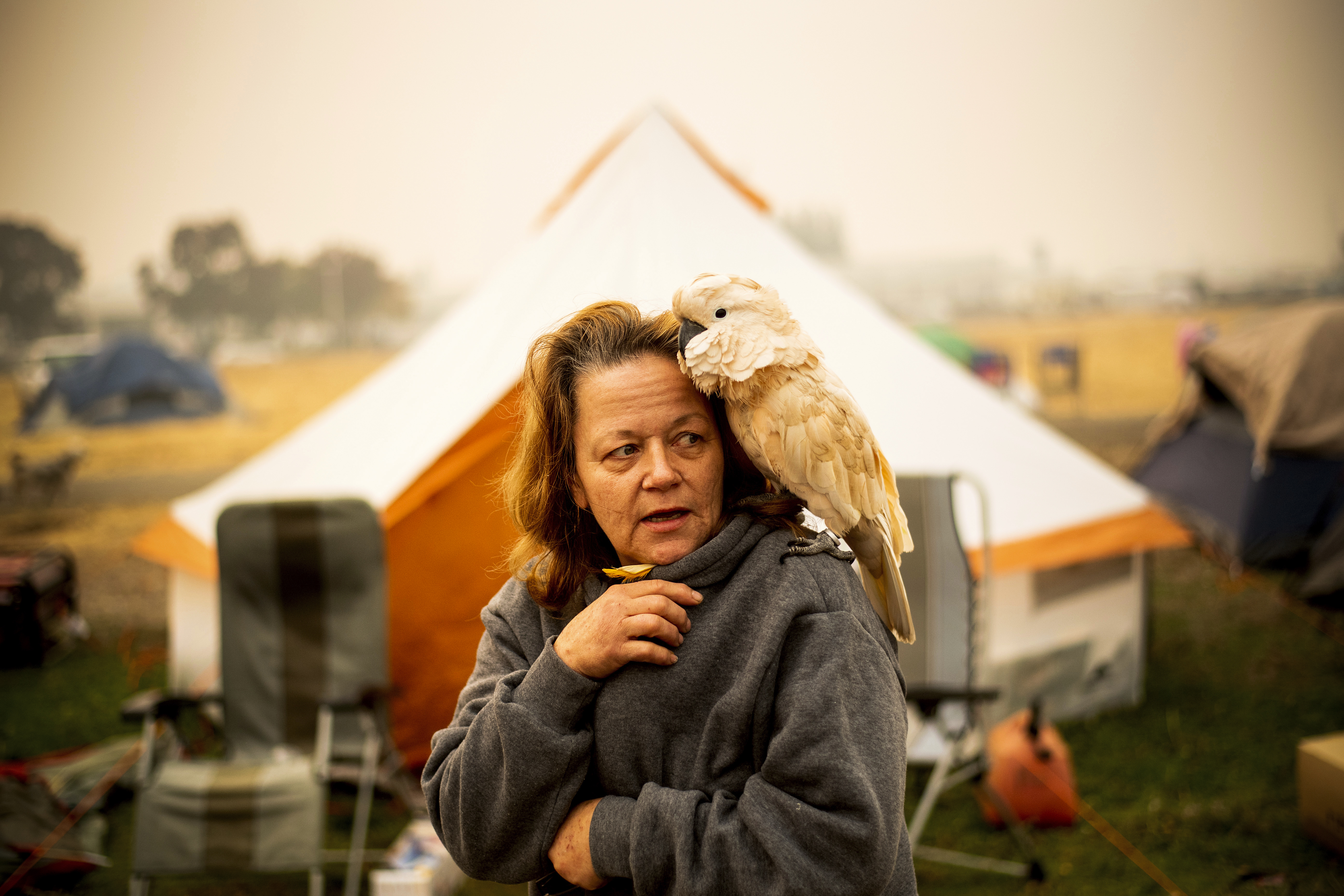 Suzanne Kaksonen, an evacuee of the Camp Fire, and her cockatoo Buddy camp at a makeshift shelter outside a Walmart store in Chico, Calif., on November 14, 2018. Kaksonen lost her Paradise home in the blaze.