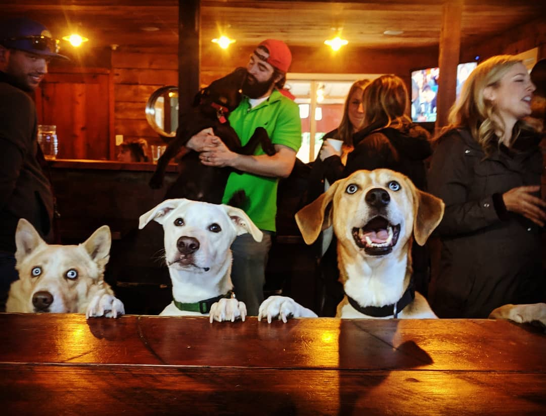 10 Pup-Friendly Bars in Seattle For All the Very Good Dogs