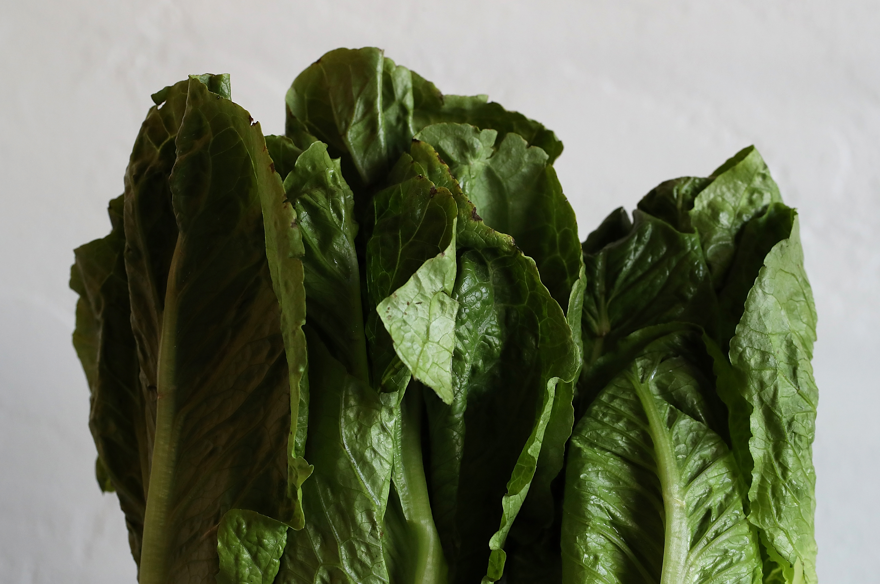 Romaine lettuce warning Don t eat any CDC advises Throw it all