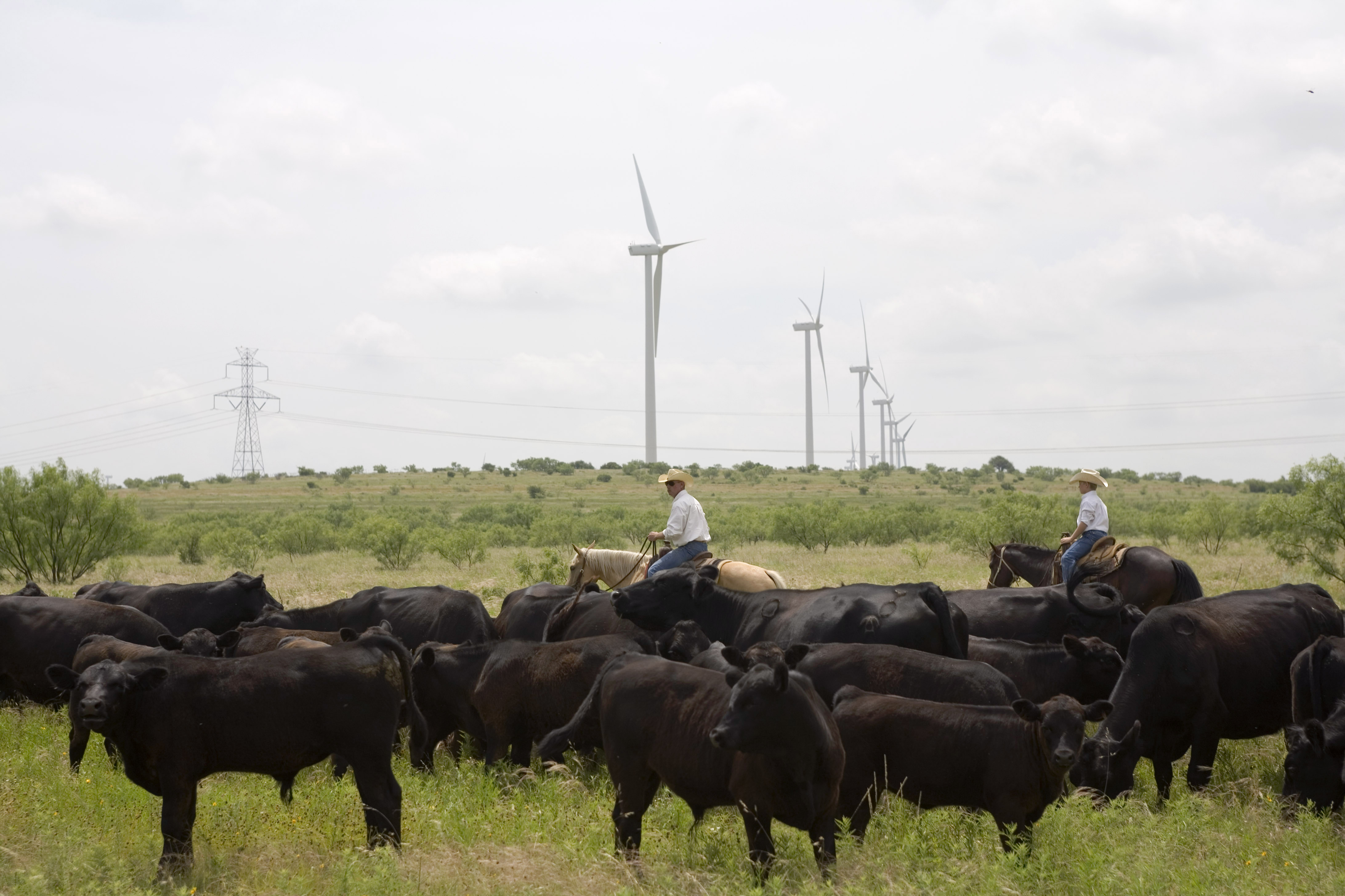 Ranchers herd cattle near the Lone Star Wind Farm north of Abilene, Texas. The state has immense potential for integrating renewable energy on its grid since its wind and sunlight complement each other so well.