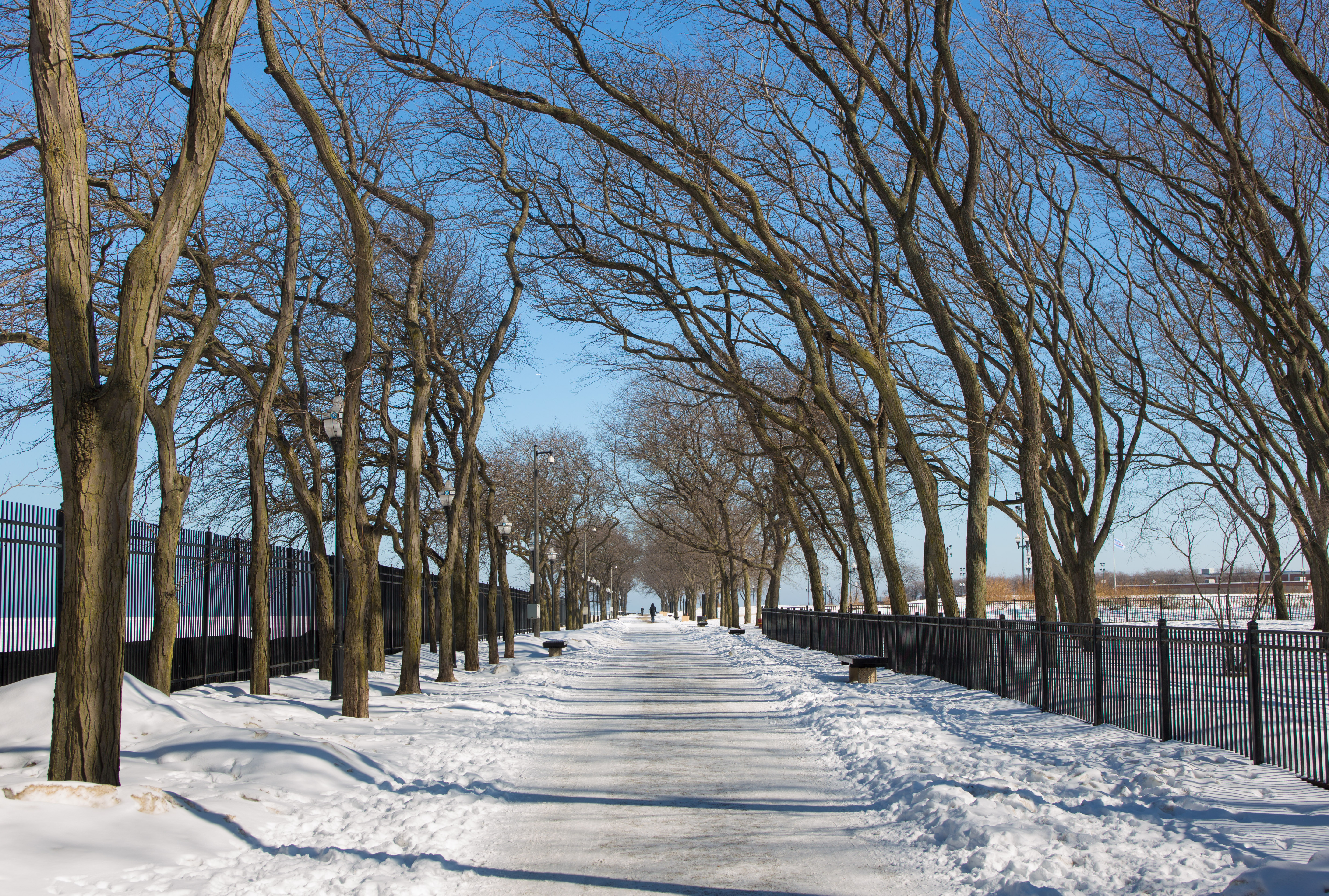 A snowy path with a row of tall trees framing the walkway.